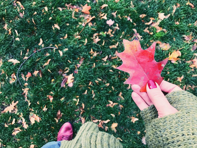 red-leaf-hand.jpg