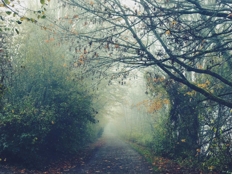 foggy-trail.jpg