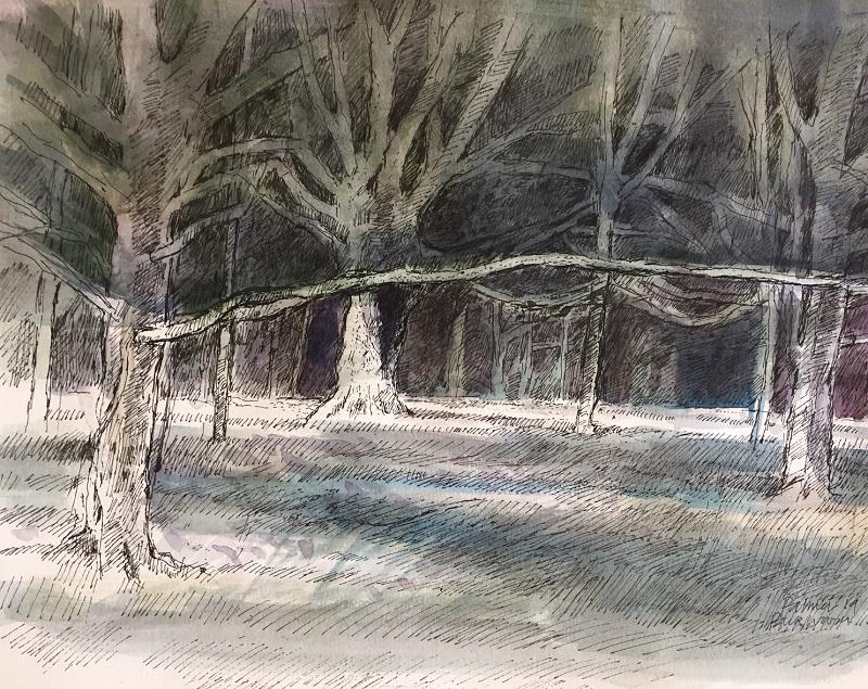 Park Wood drawing ink & wash £200