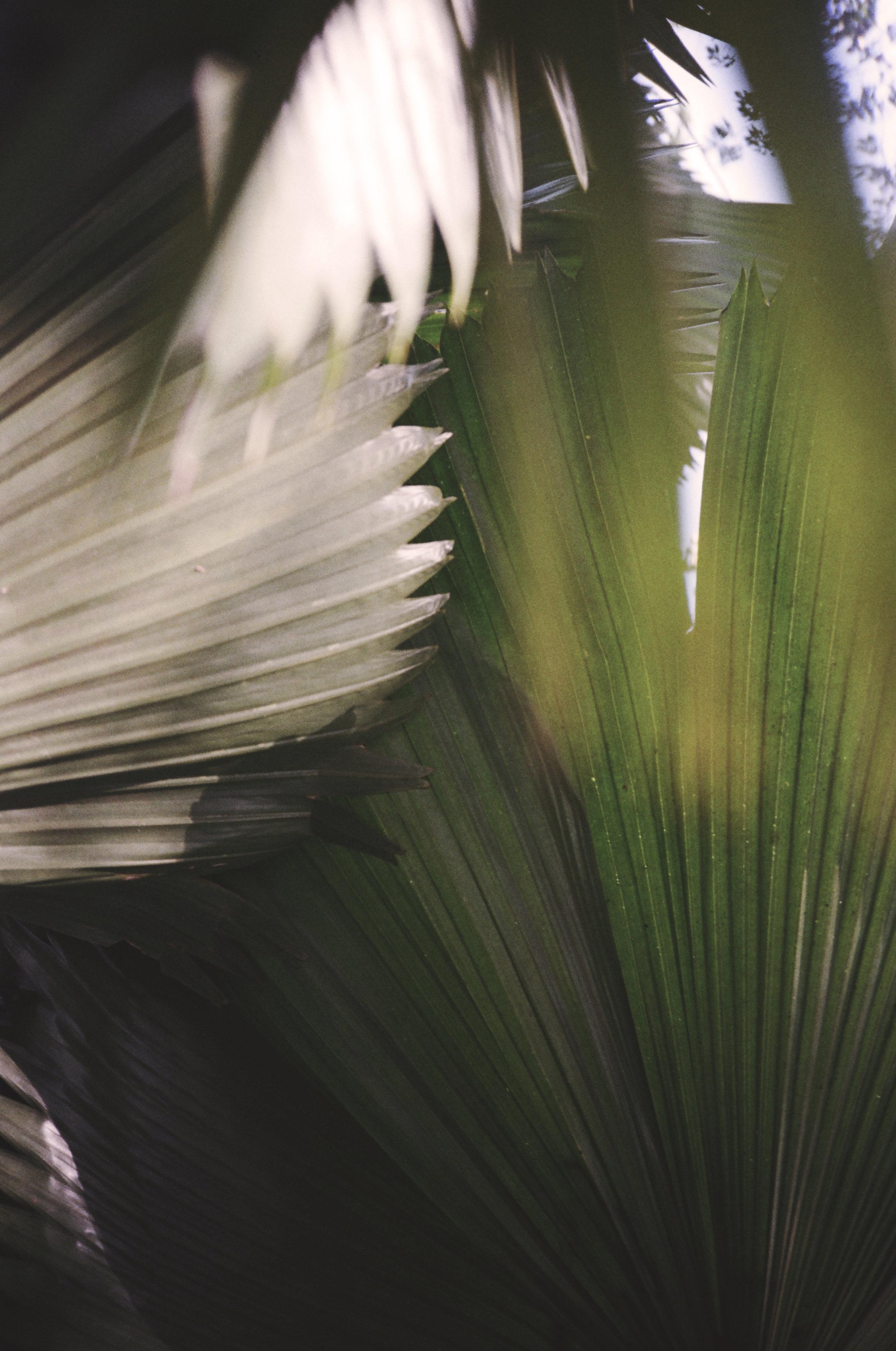 Palms of Berg En Dal.jpg