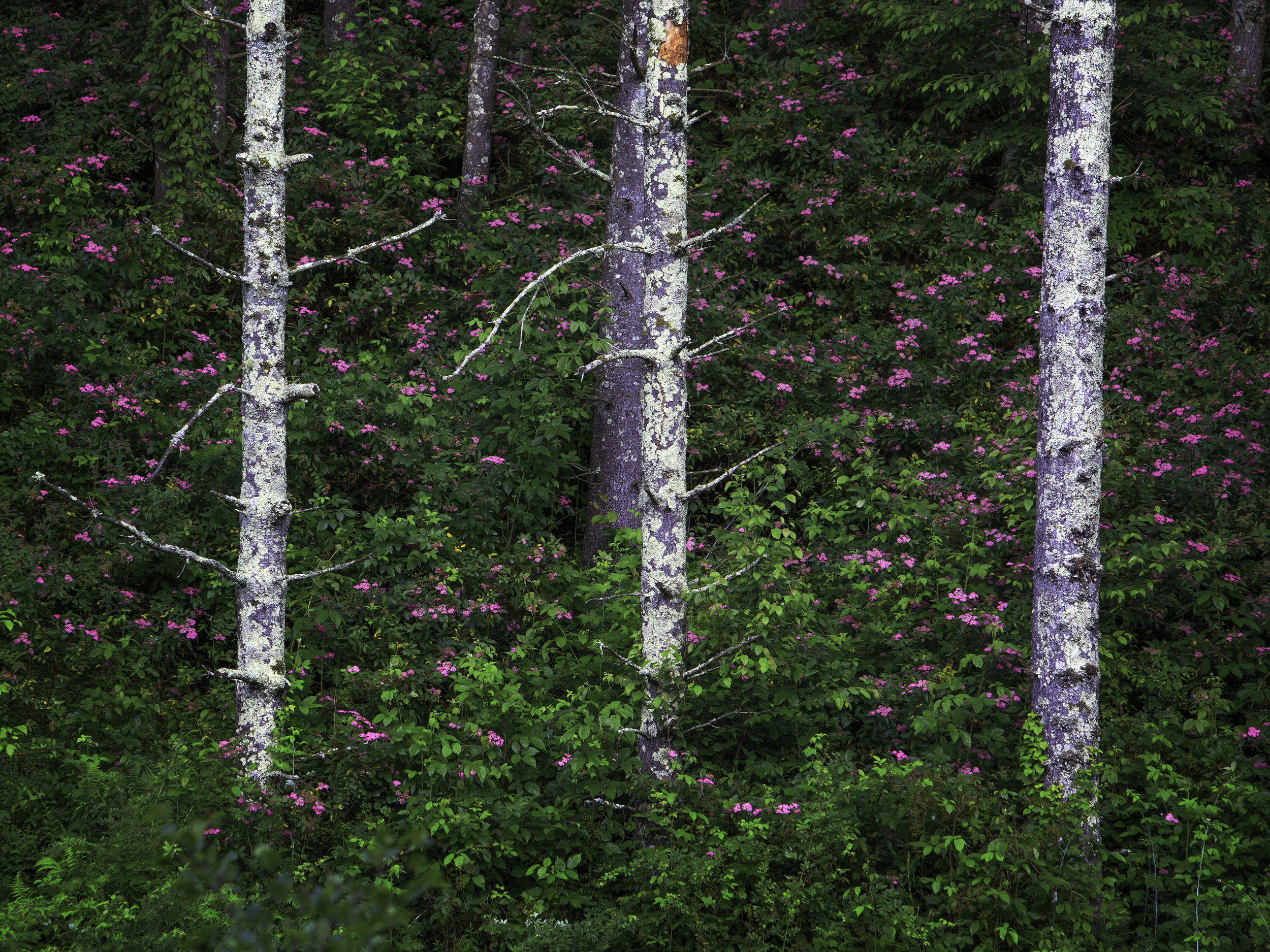 Blue Ridge Parkway, Forest of Flowers