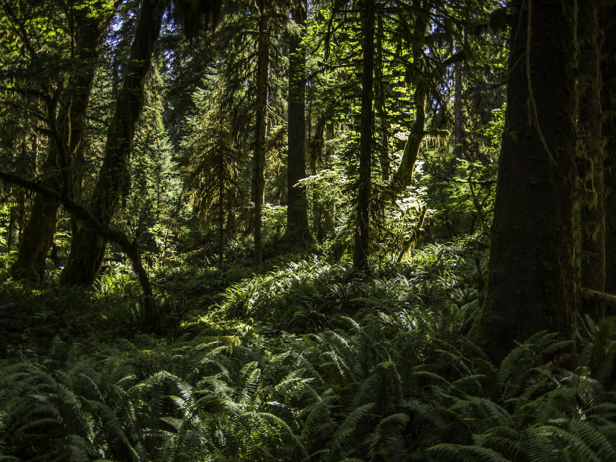 How Rainforest, Washington