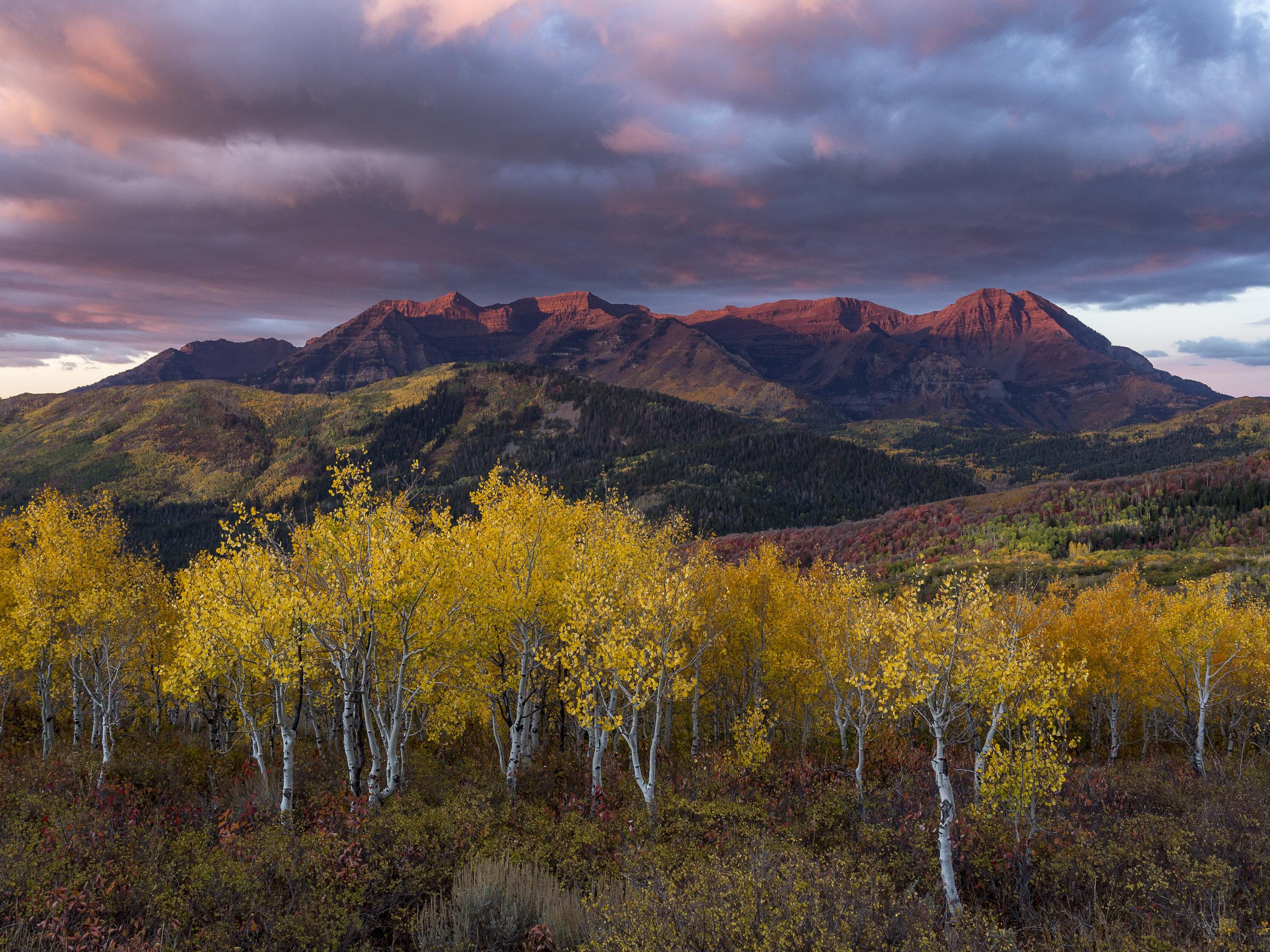 Fall Foliage at sunrise with Mount Timpanogos alpenglow