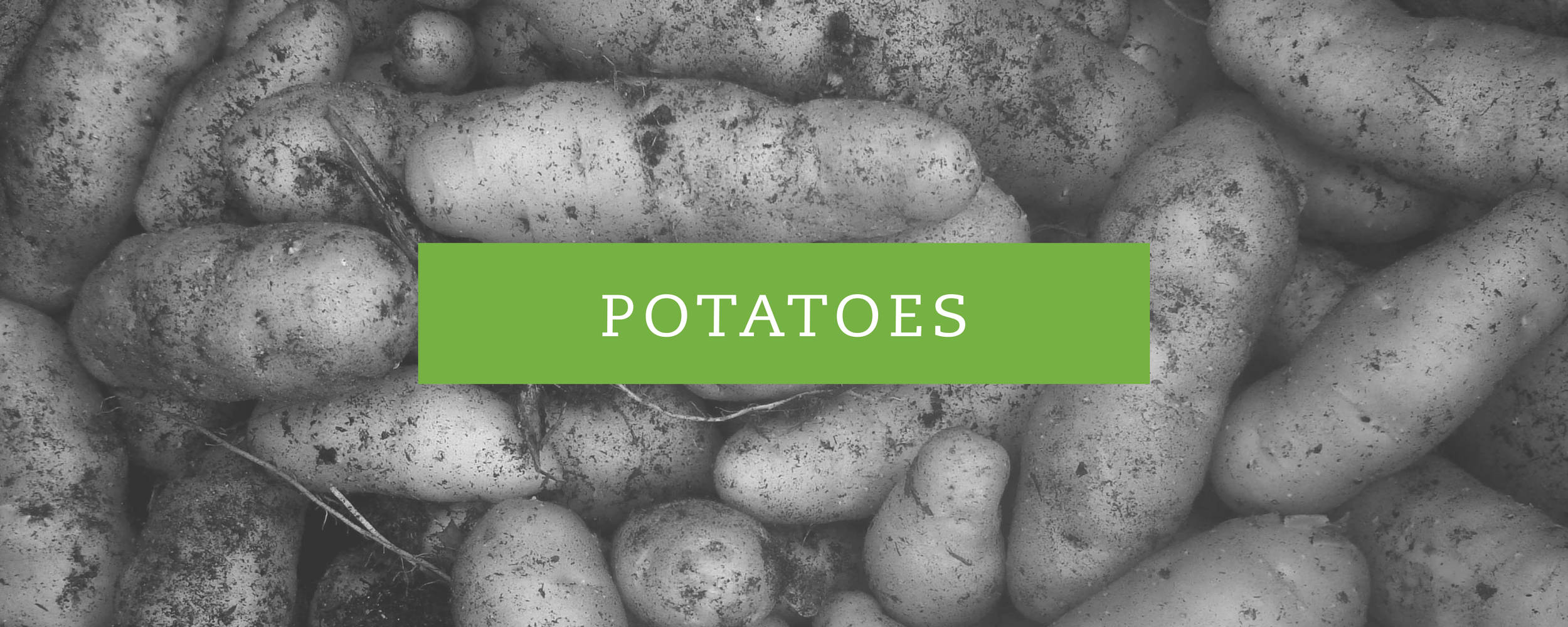 POTATOES BANNER BW.jpg