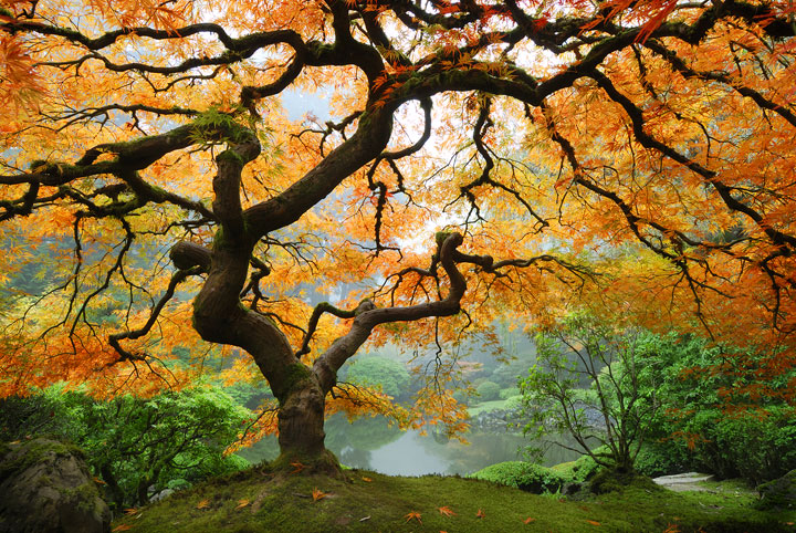 autumn-maple-web.jpg