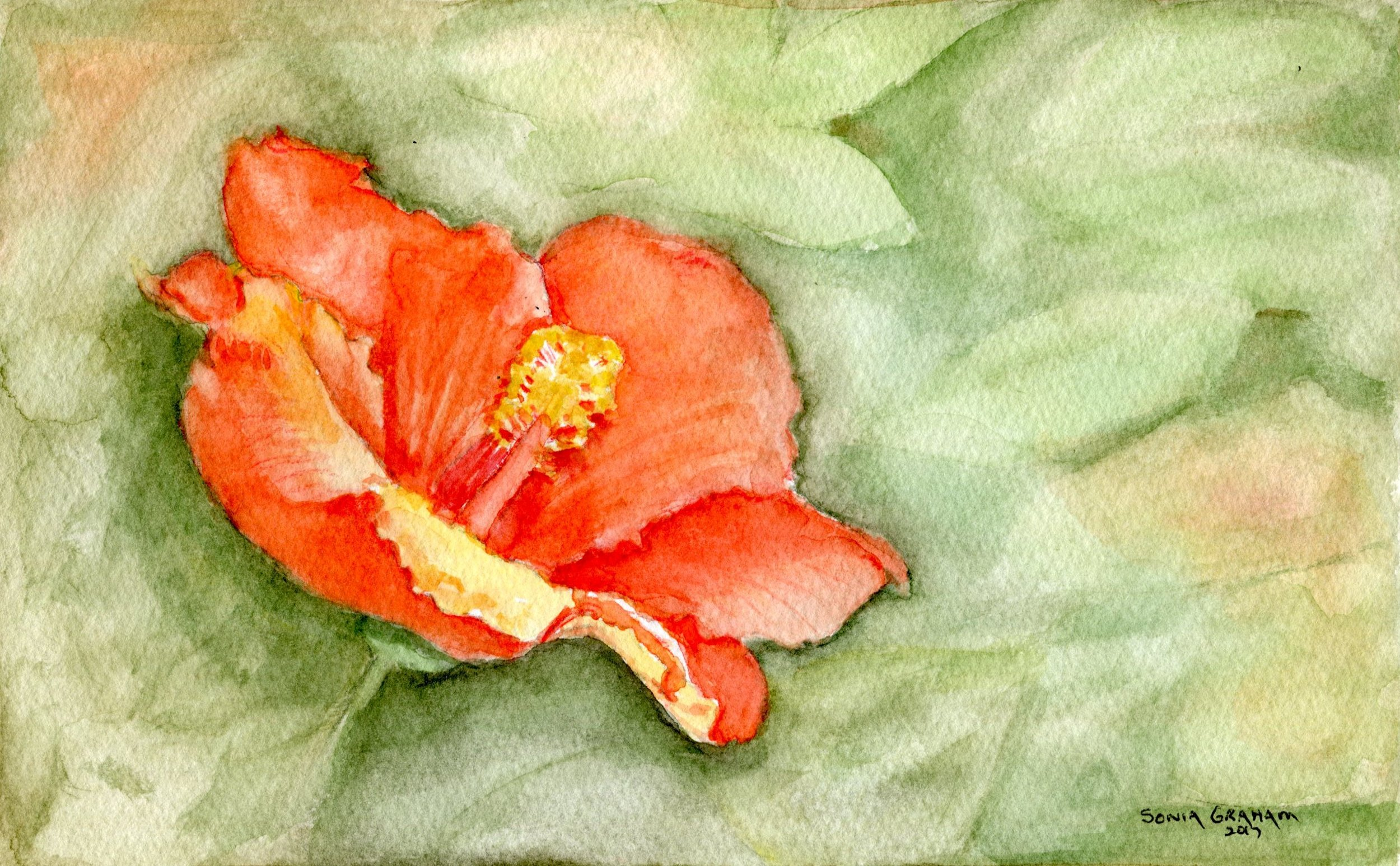 10B SONIA GRAHAM, HIBISCUS, WATERCOLOUR ON PAPER