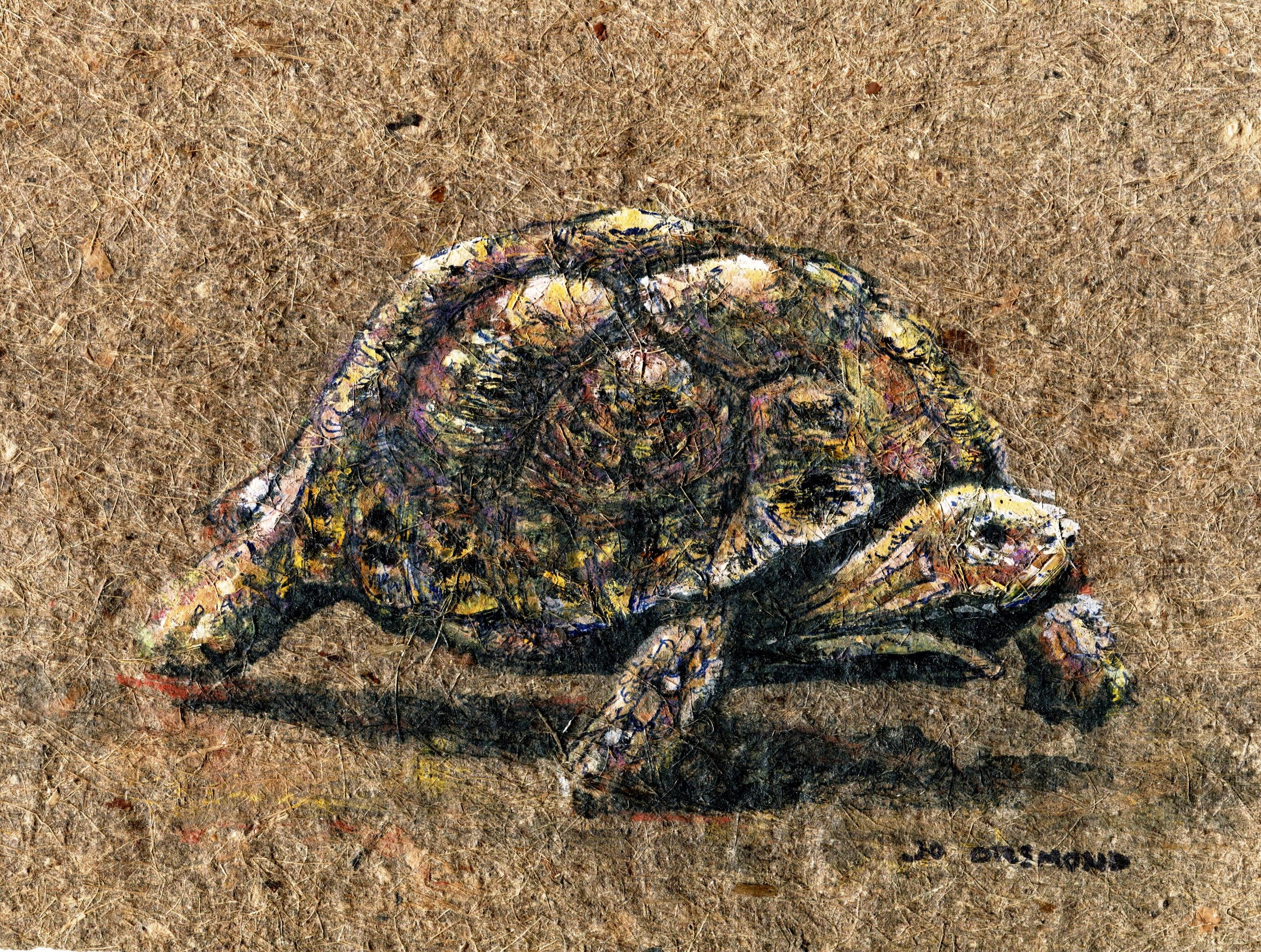 14A JO ORSMOND, TORTOISE, MIXED MEDIA ON DUNG PAPER