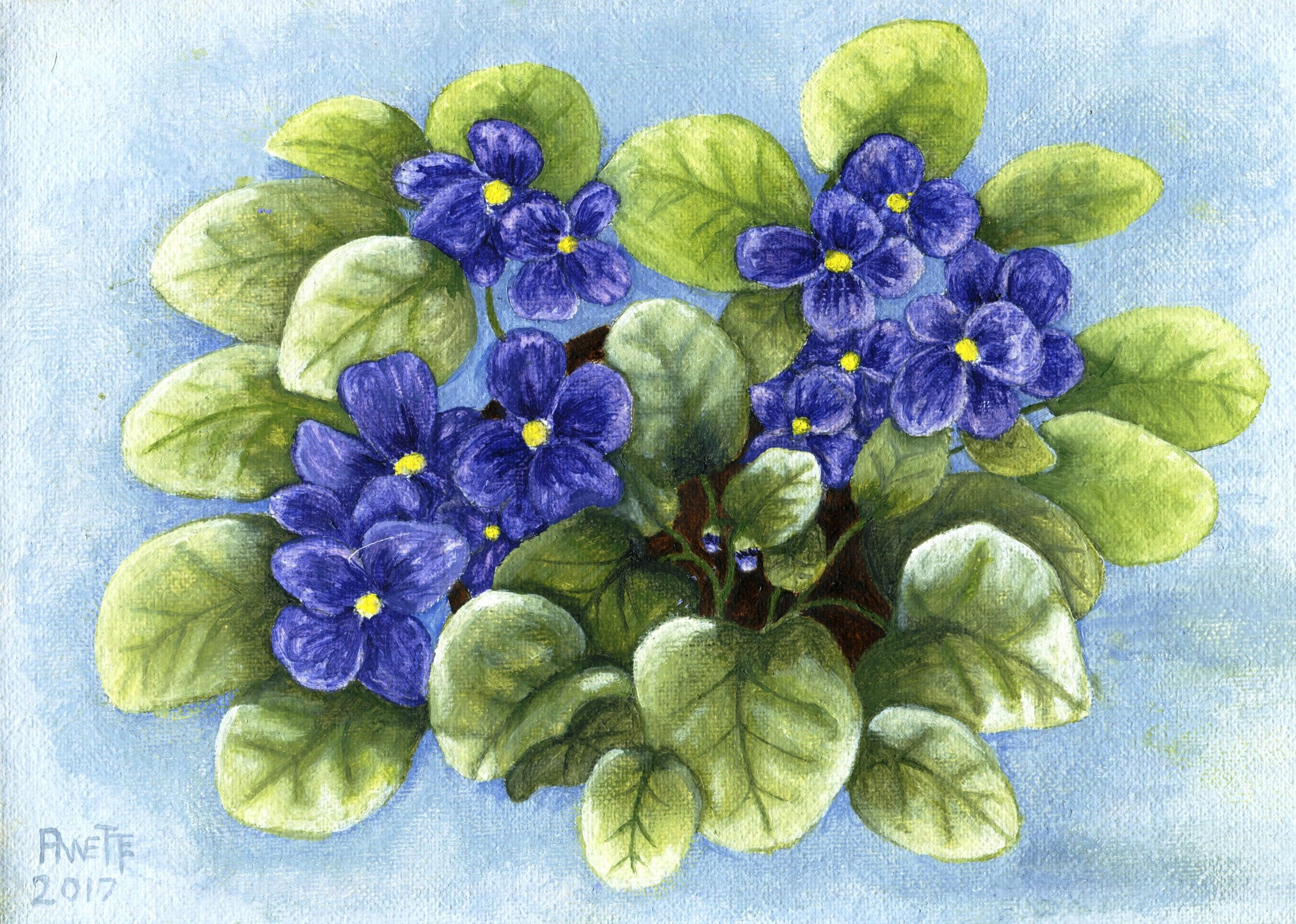 25B ANNETTE FARLAND,PURPLE AFRICAN VIOLET, OIL ON CANVAS