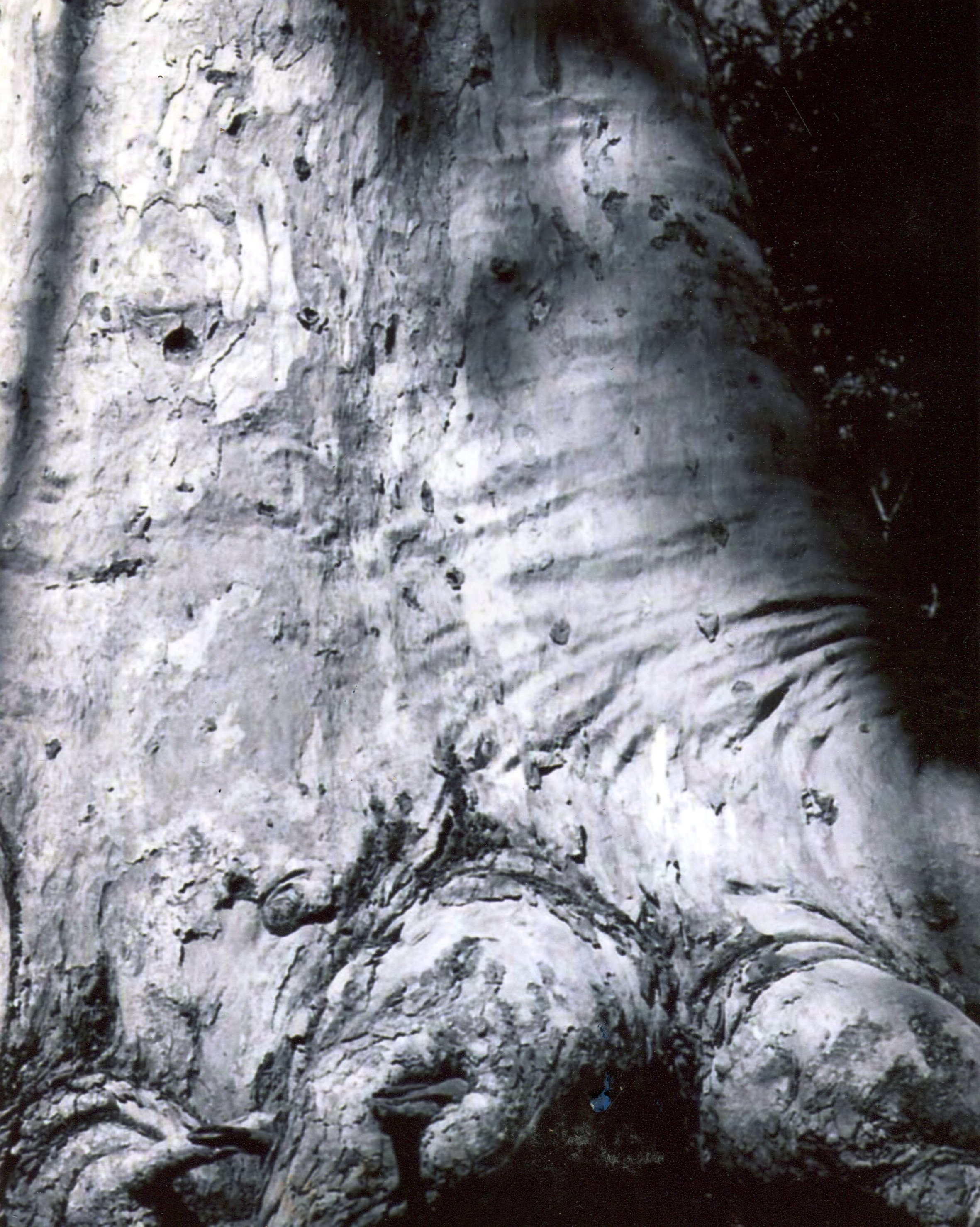 44A PAUL MURRAY, BLACK AND WHITE TREE, PHOTOGRAPH