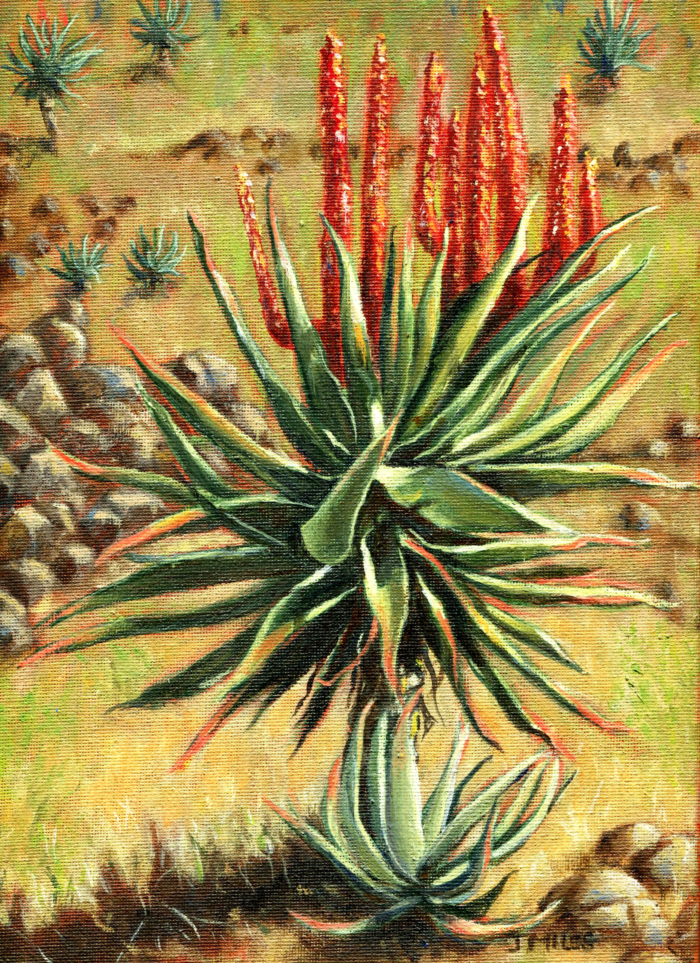 60B CREIGHTON VALLEY ALOES 2, OIL ON CANVAS