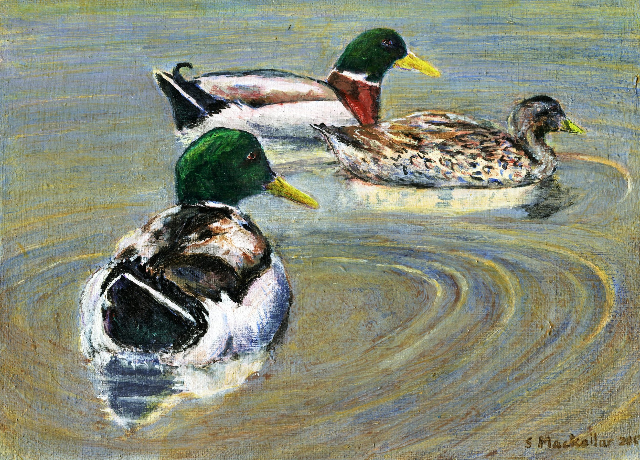 65B SHIRLEY MACKELLAR, LIKE A DUCK TO WATER, ACRYLIC ON CANVAS BOARD