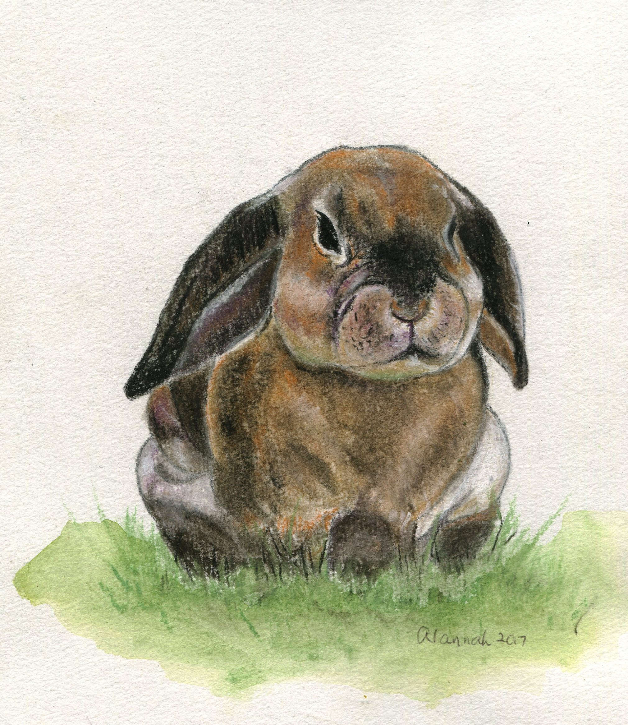 68A ALANNAH VALENTINE, BUNNY I, PASTEL ON PAPER