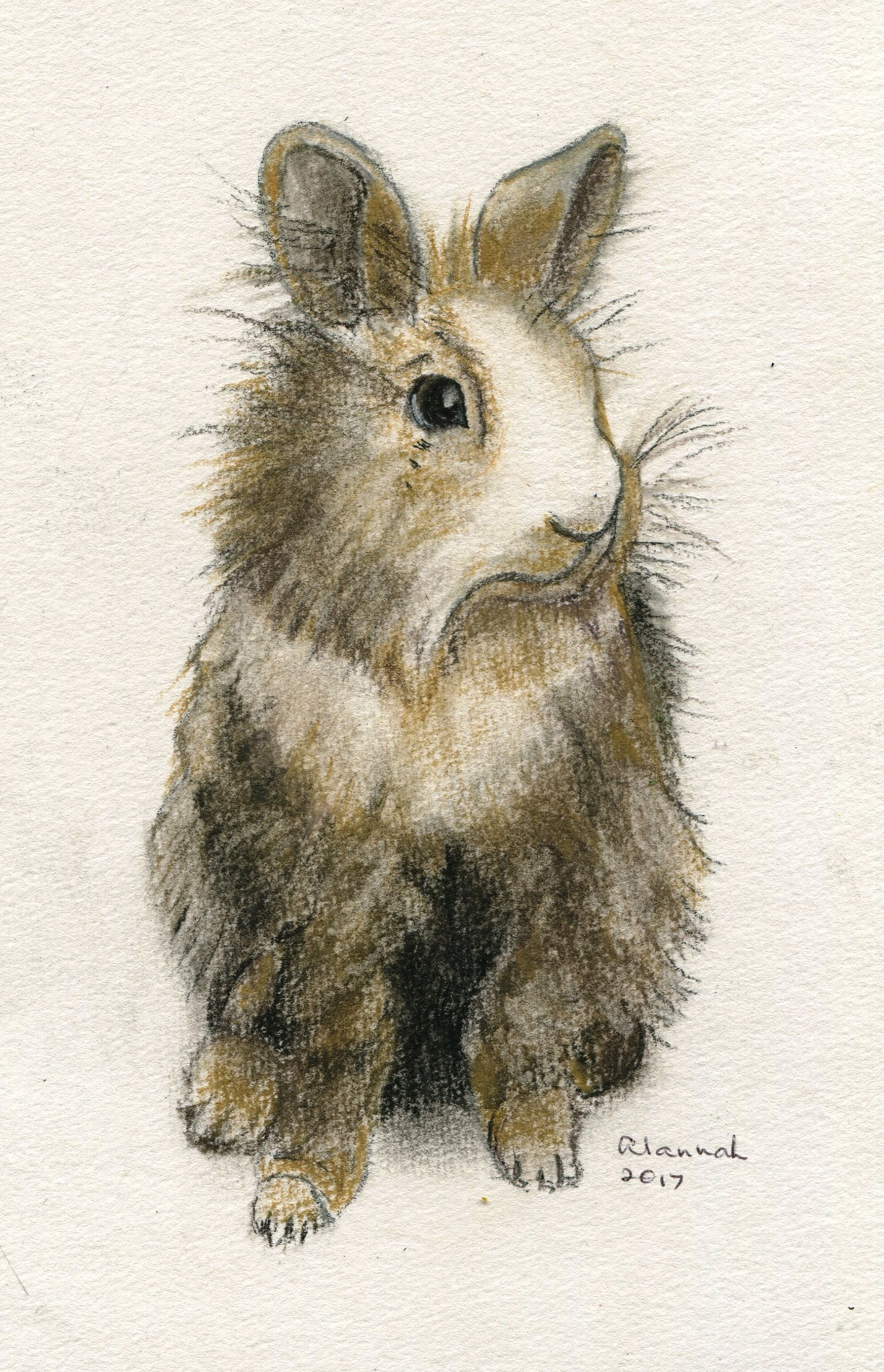68C ALANNAH VALENTINE, BUNNY 3, PASTEL ON PAPER