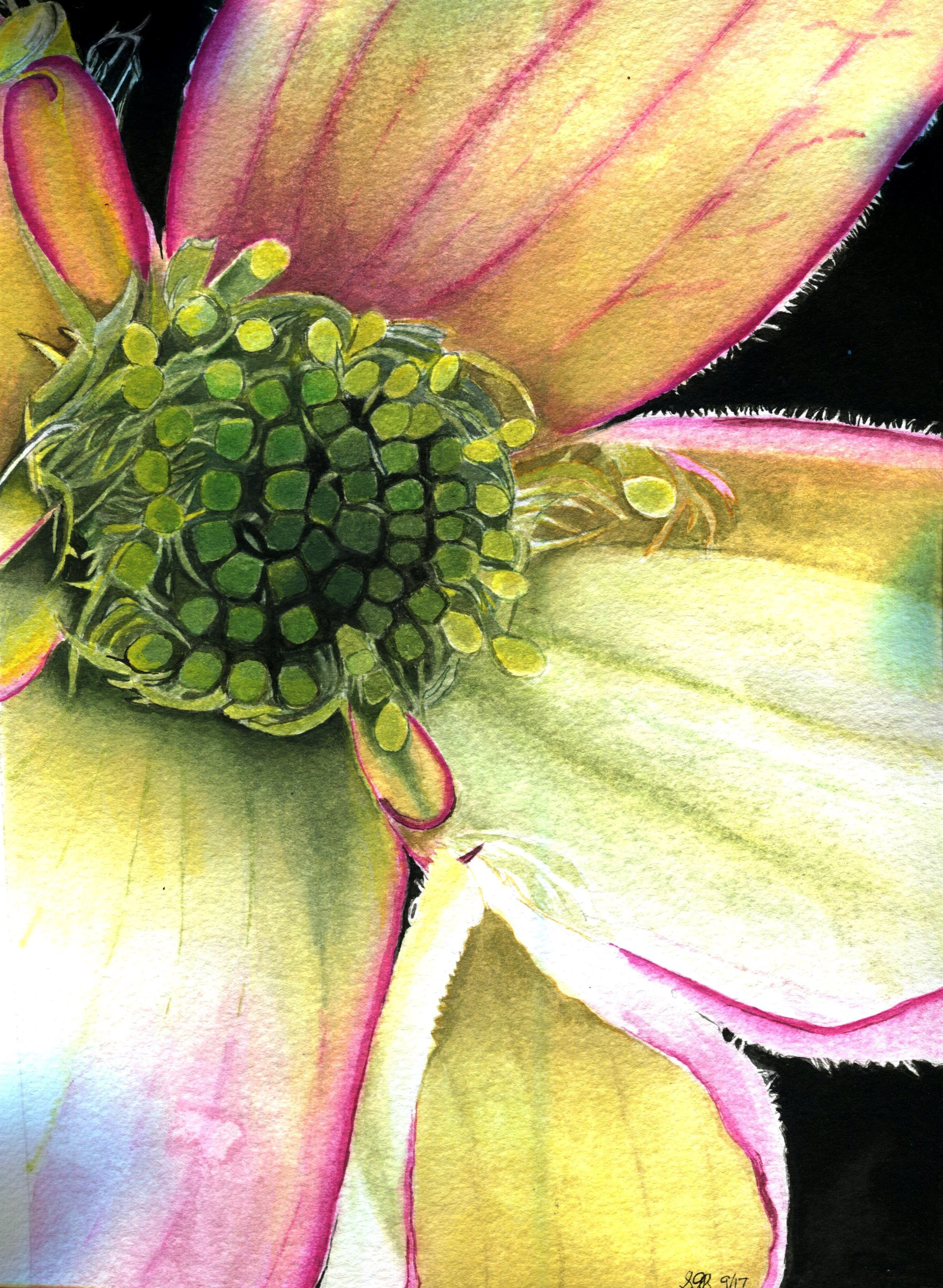 76A SUE RAUTENBACH, CLEMATIS, WATERCOLOUR ON PAPER