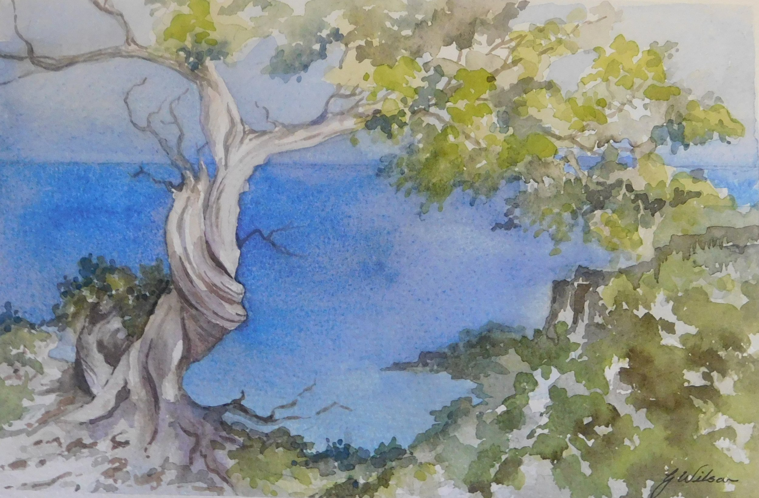 01A GLENDA WILSON, TWISTED OLIVE TREE, WATERCOLOUR ON PAPER