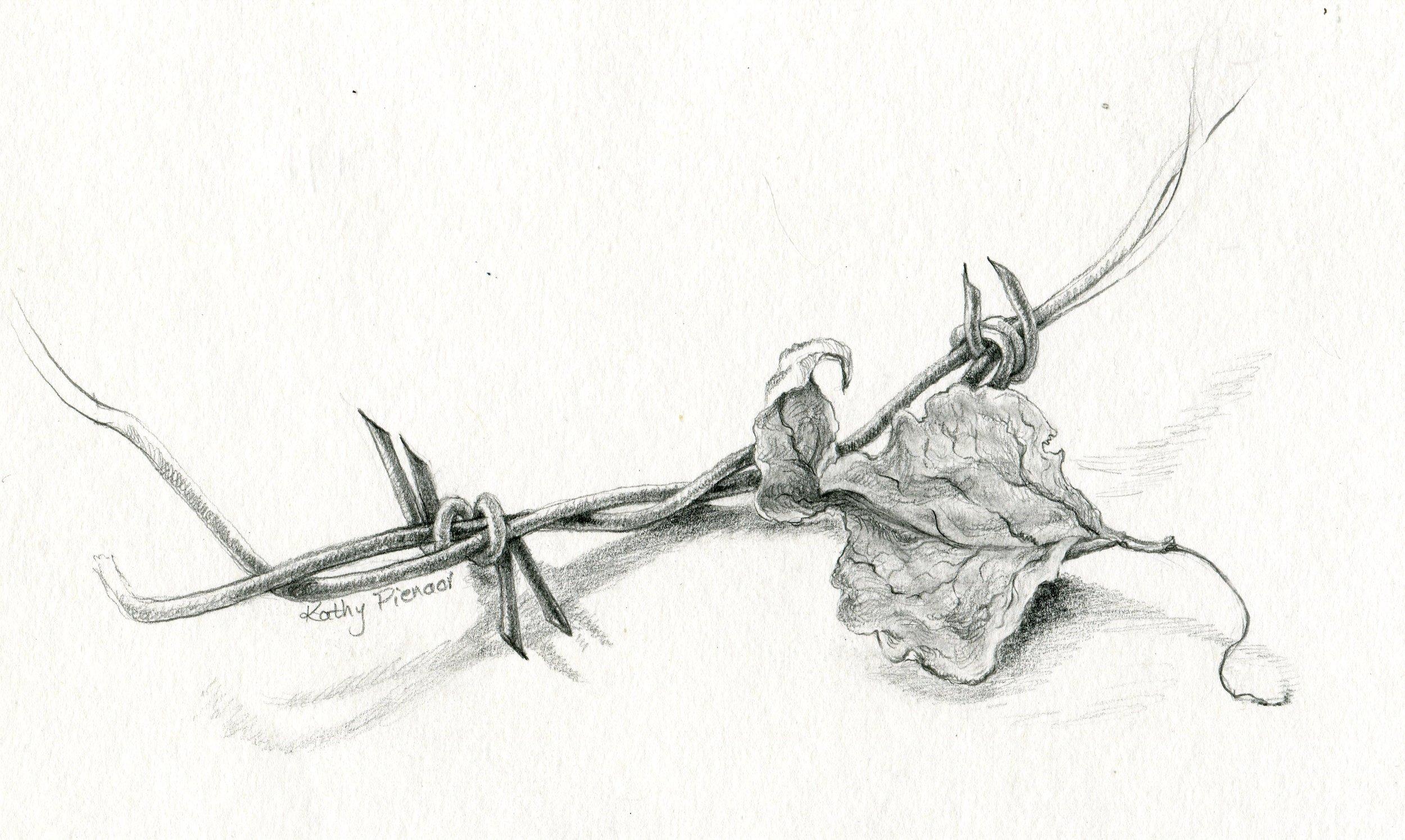 14b  Kathy Pienaar  Landscape 2  pencil on paper