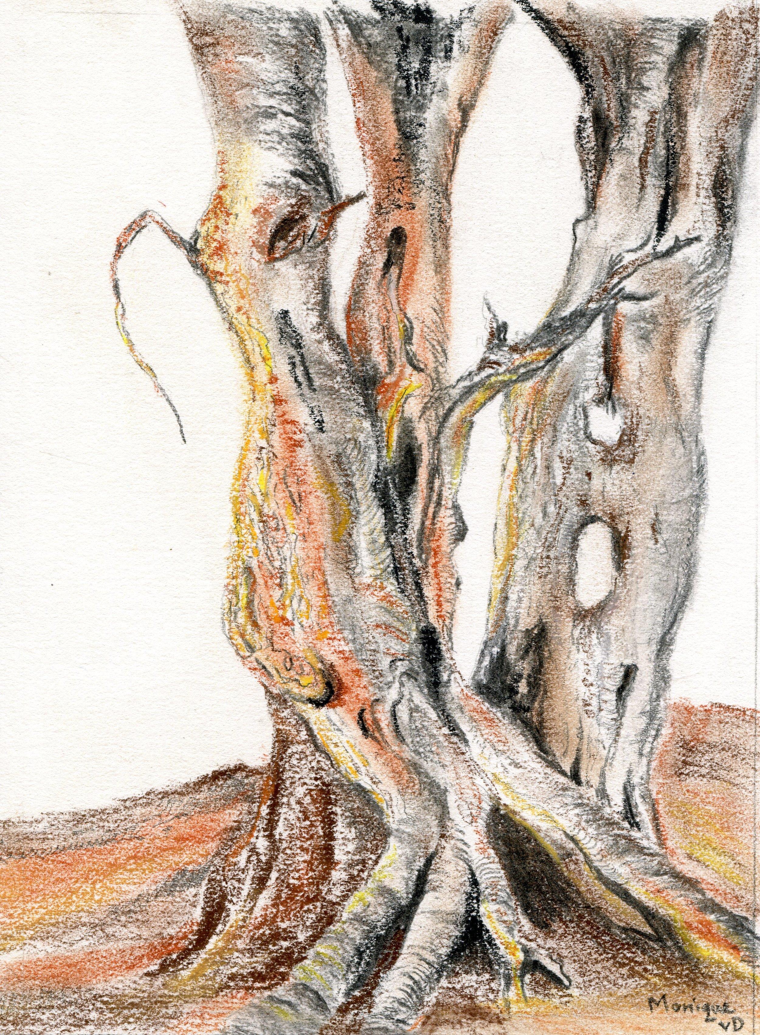 19a  Monique van Deventer  Botswana  charcoal and conte on paper