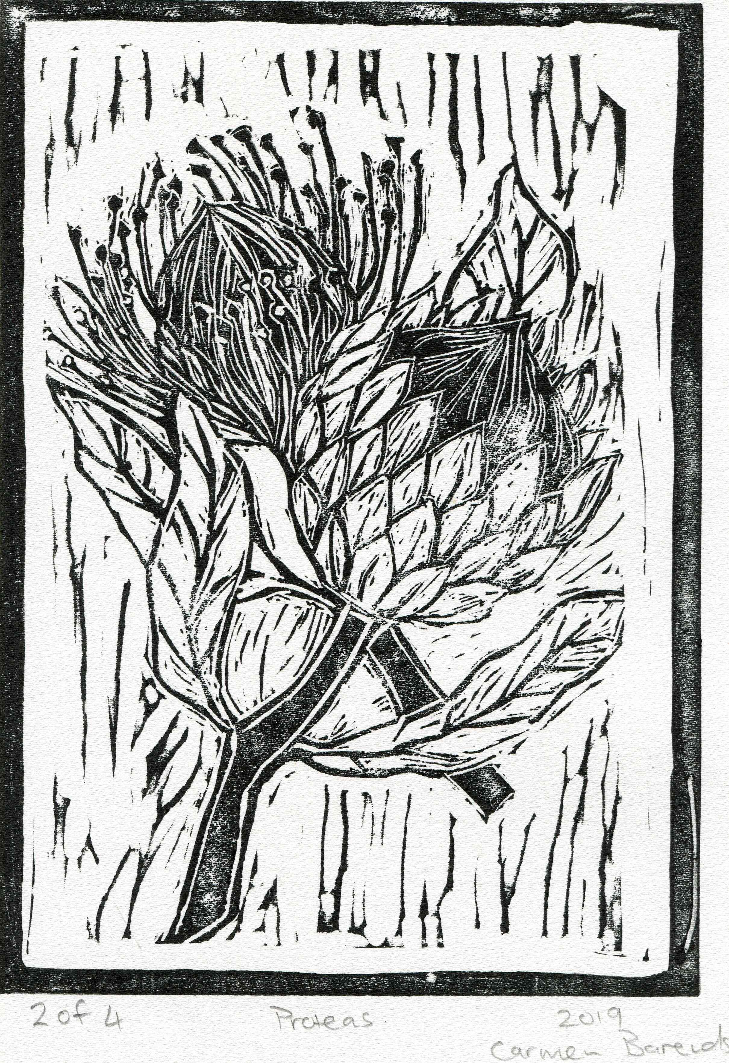31b  Carmen Barends  Proteas  linocut print on paper