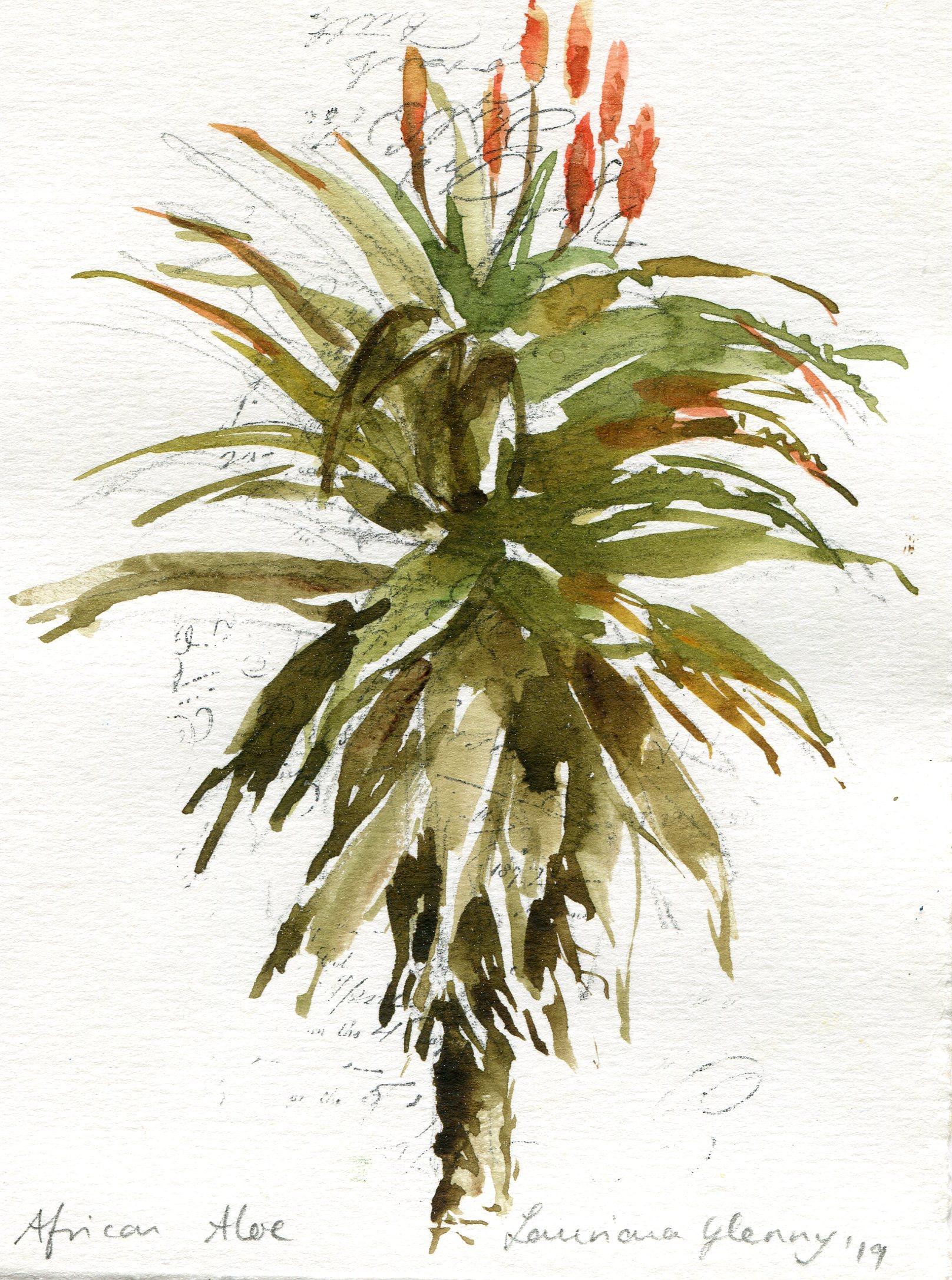 39a  Lauriana Glenny  Aloe I  watercolour on paper