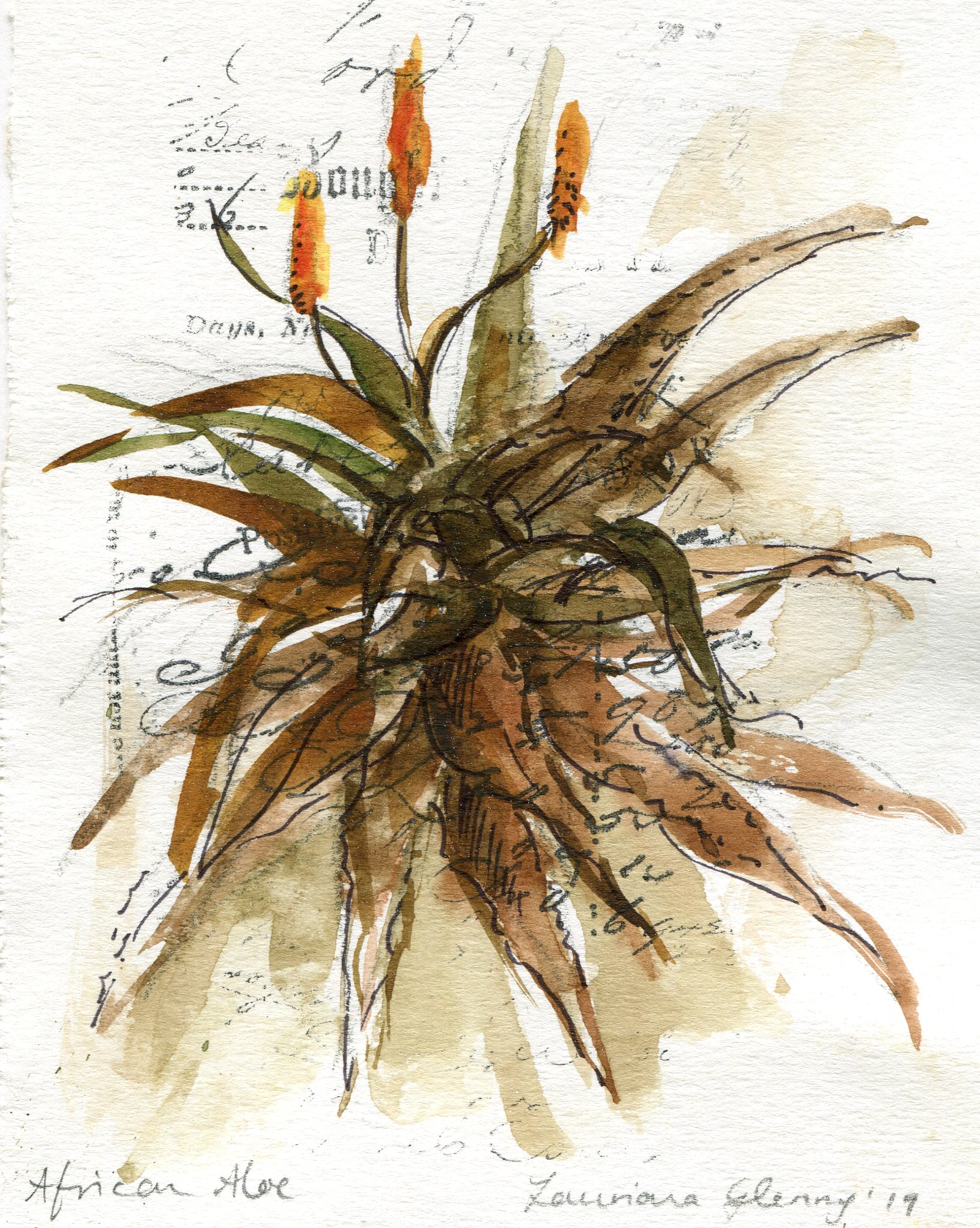 39b  Lauriana Glenny  Aloe II  watercolour on paper