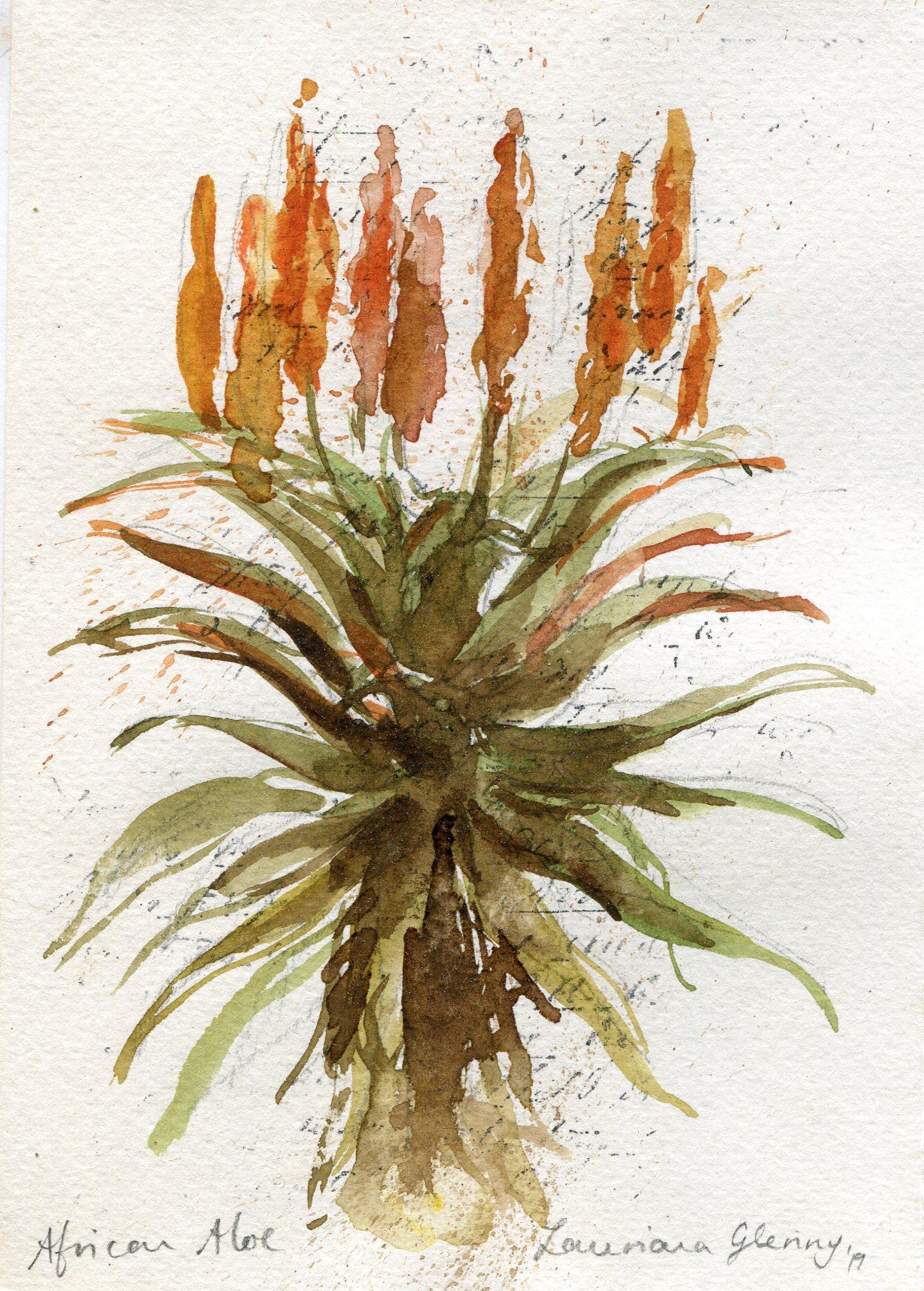 39c  Lauriana Glenny  Aloe III  watercolour on paper