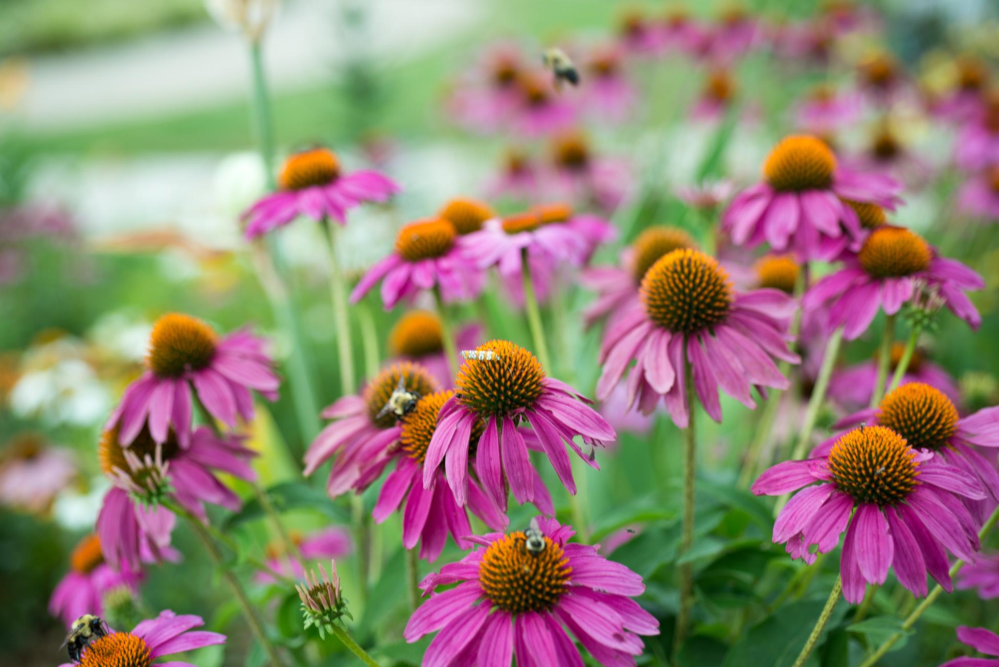 A few wildflowers.