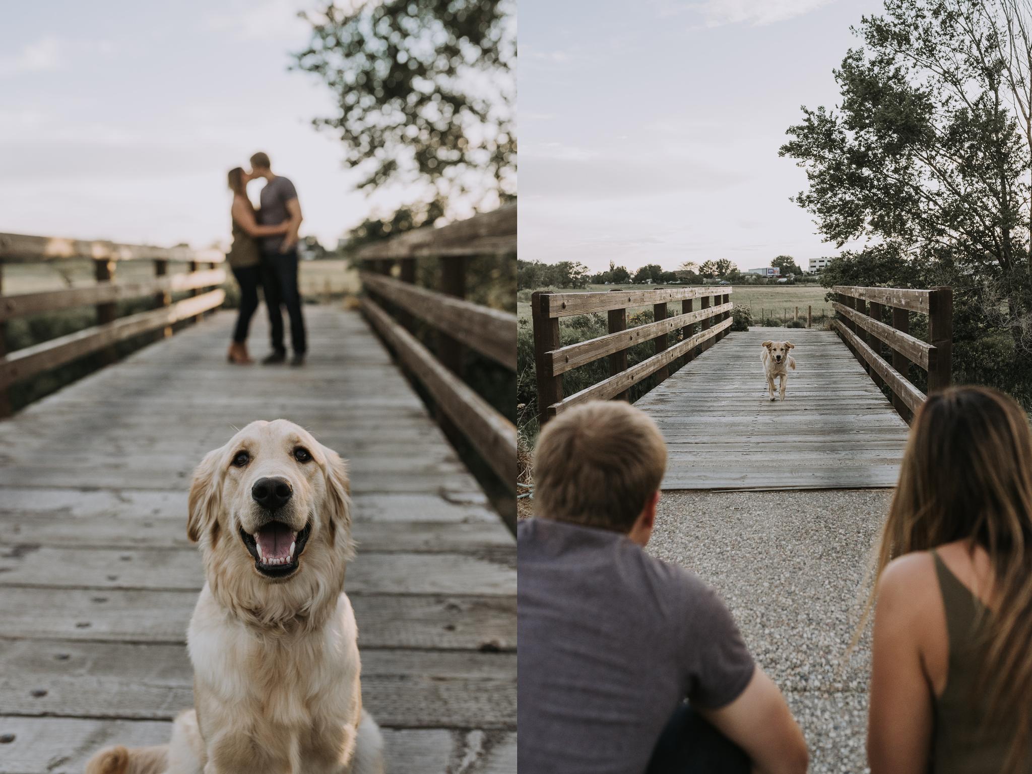 bismarck-dog-engagement-photos.png