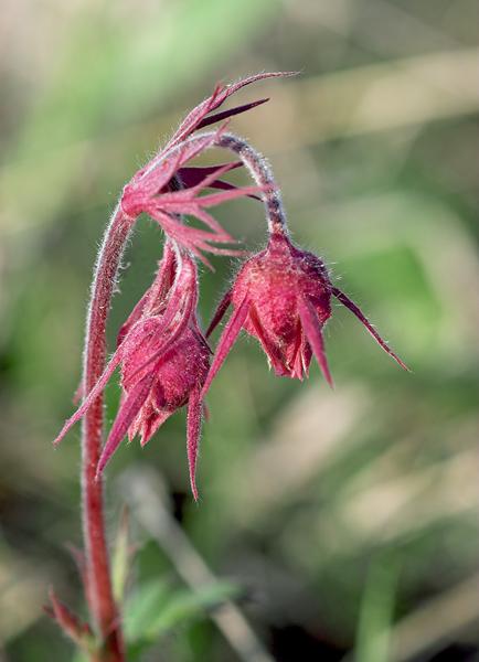 Alternate Wildflower