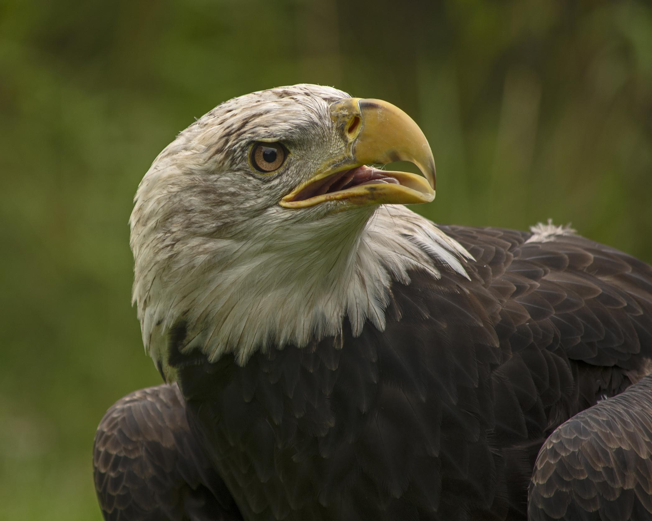 8058~CNP~Eagle~Wilson~Milton~RET.jpg