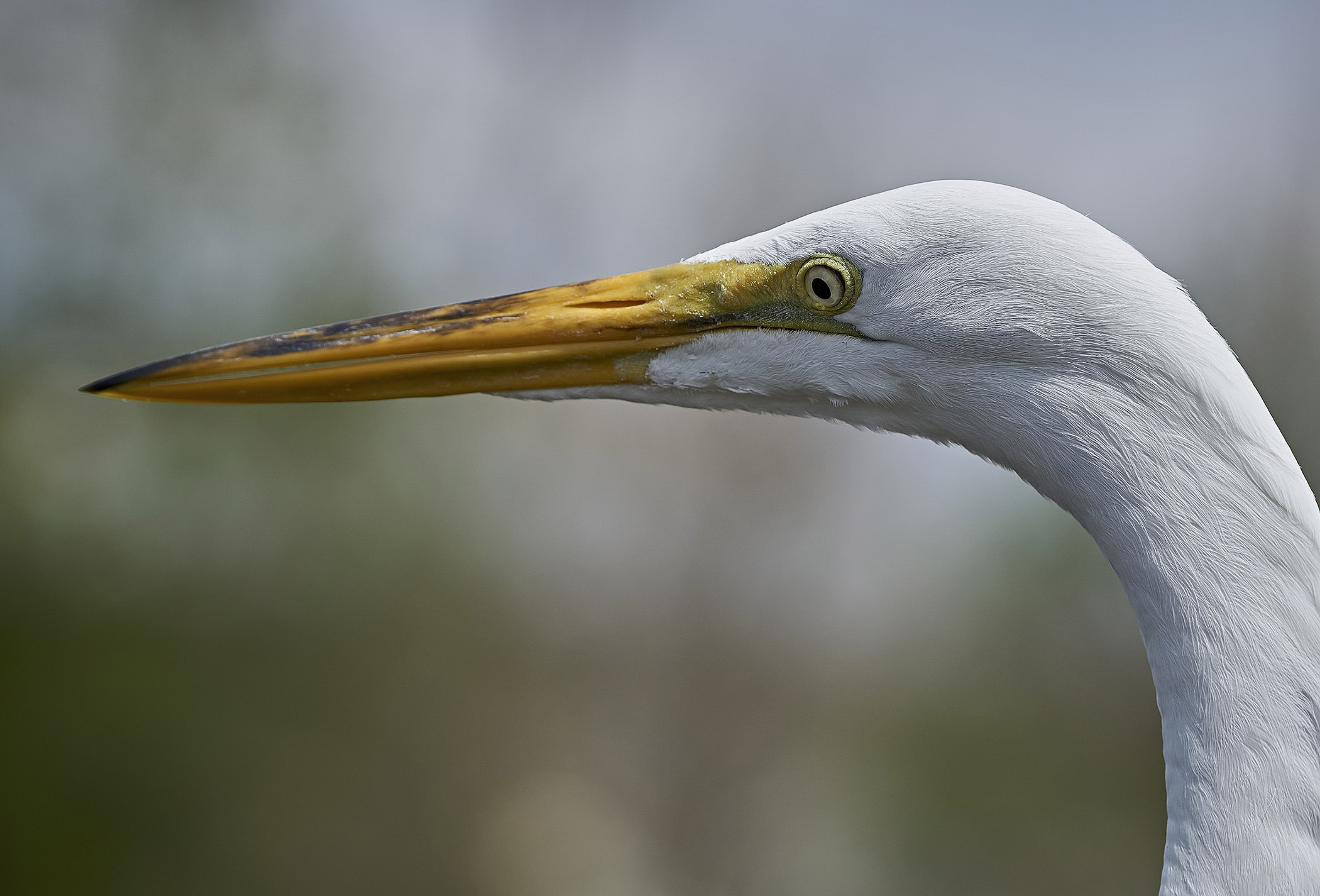Egret Profile - RJ Crocker