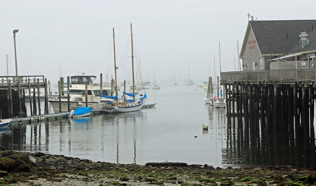 Maine Morning - Donna Streiff