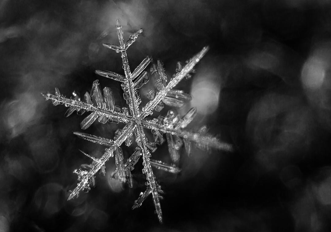 Snowflake - Ray Wery