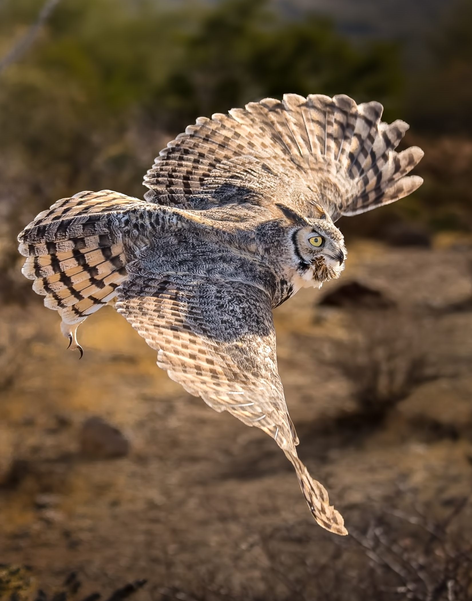 CNP~3rd Place~The Great Horned Owl~Jerry Clish - Fox Valley