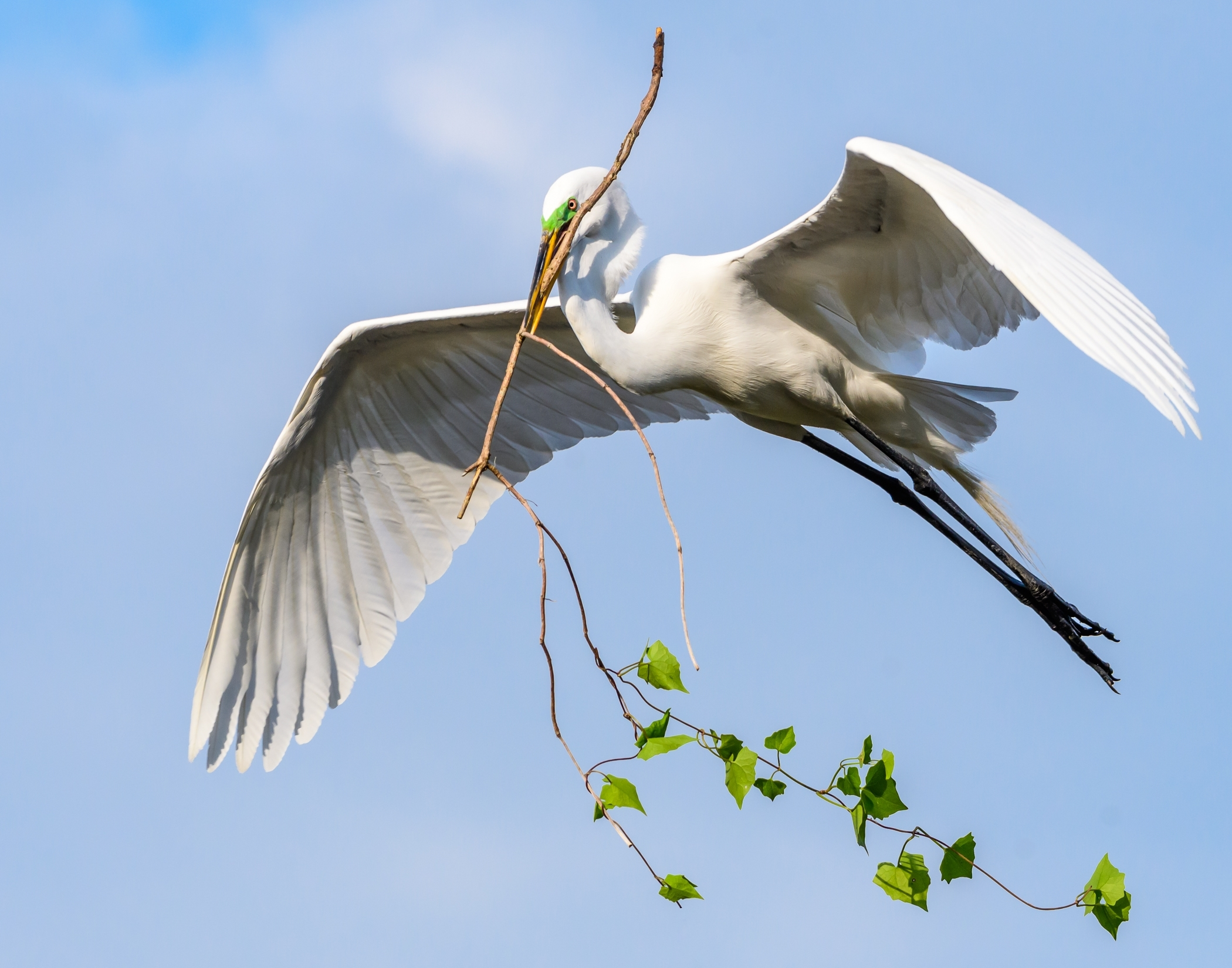 2nd Place~Egret Flight W Branch~Ken Warning~Menomonee Falls