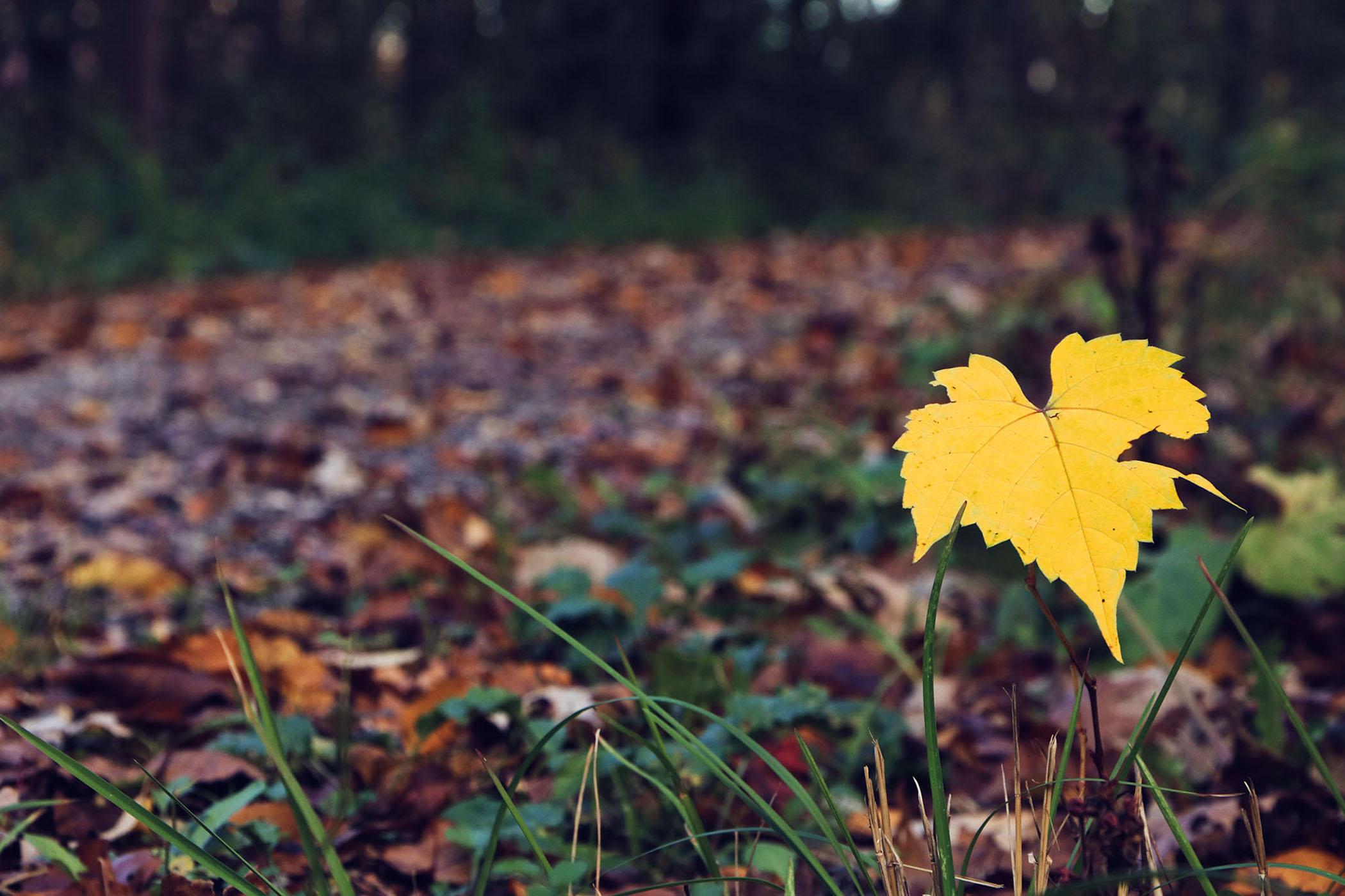 Fall Colors - Megan Piette
