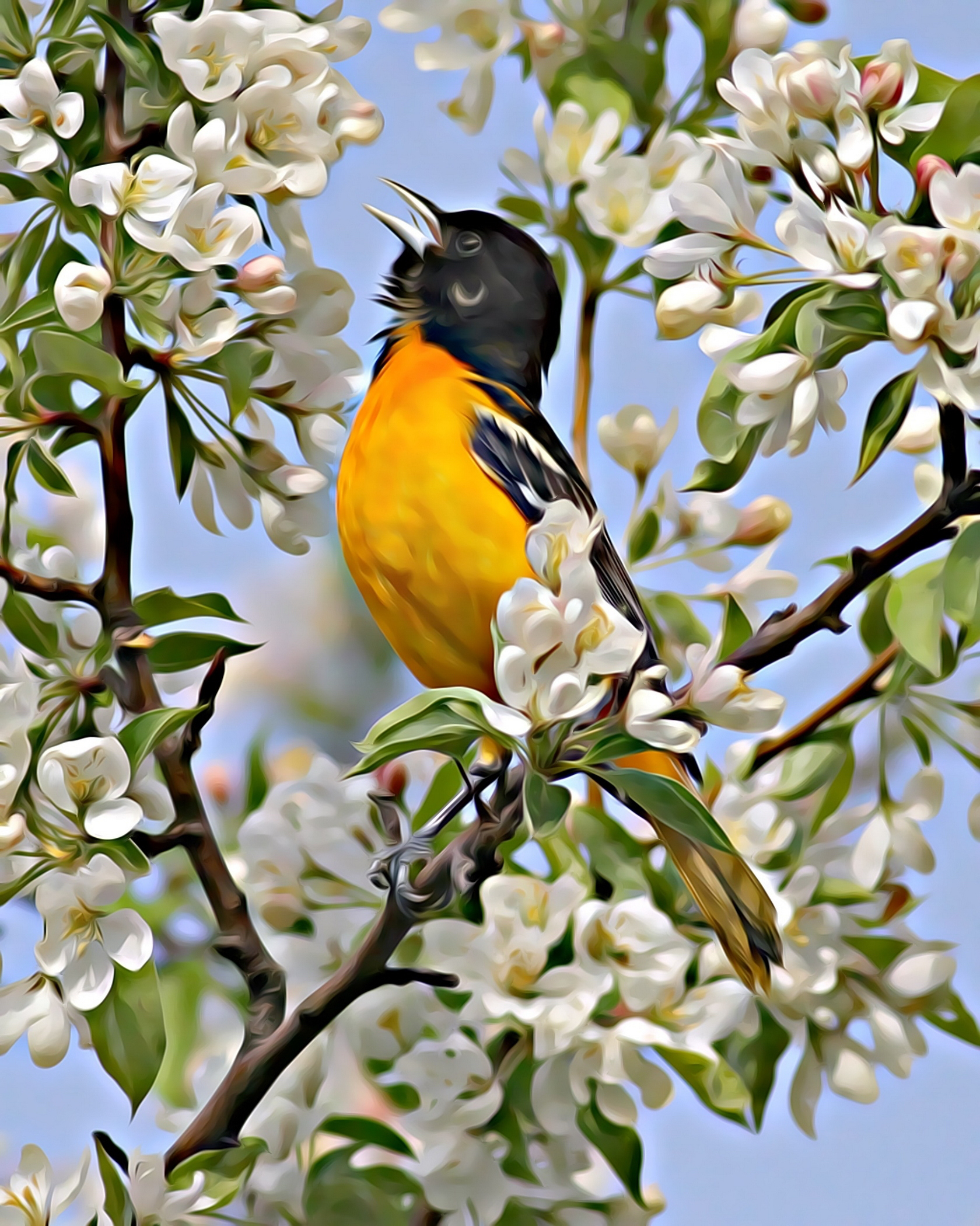 2nd Place~Oriole Beauty~Jim Edlhuber