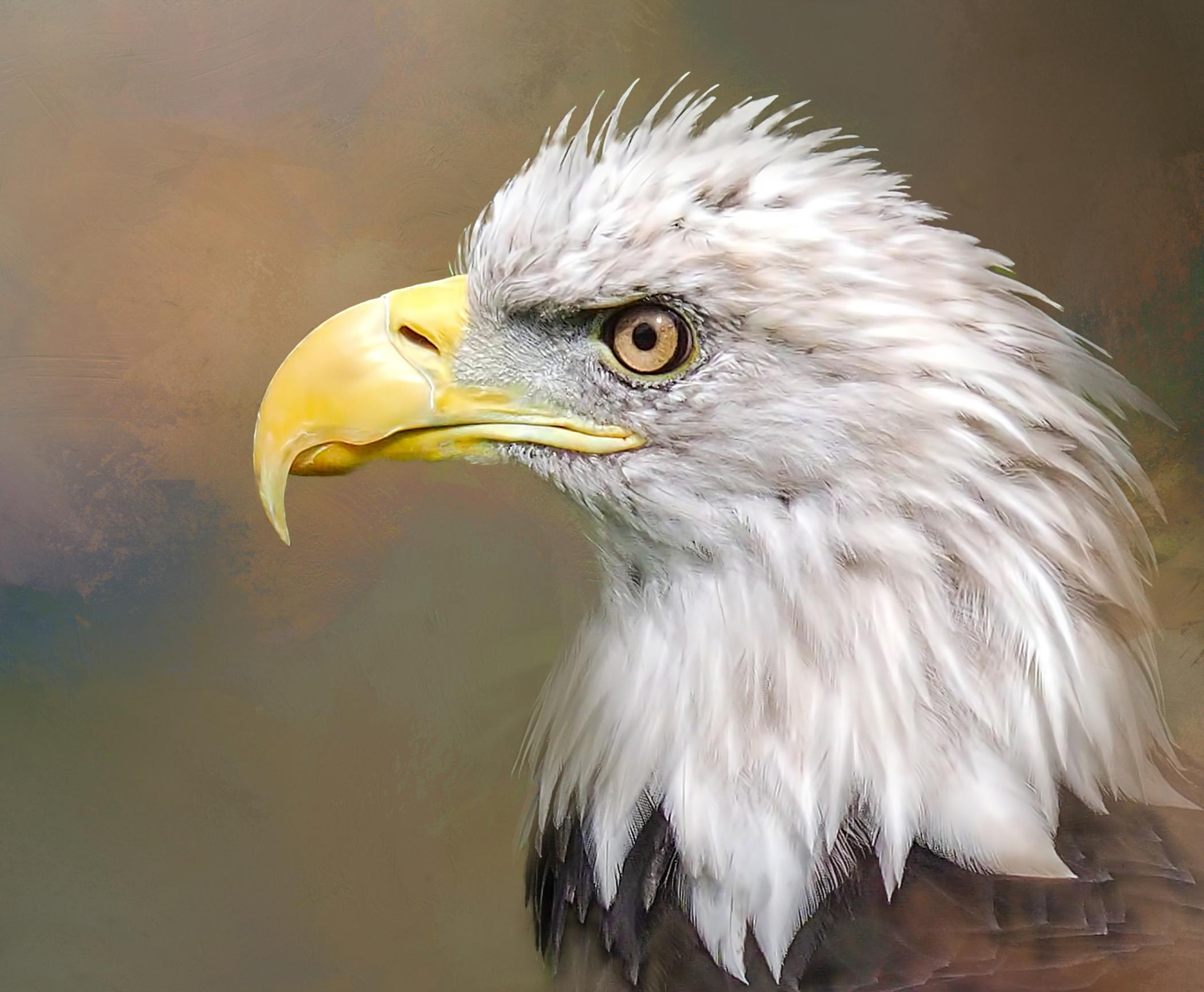 OLP~Bald Eagle~Jessie Buchholz.jpg