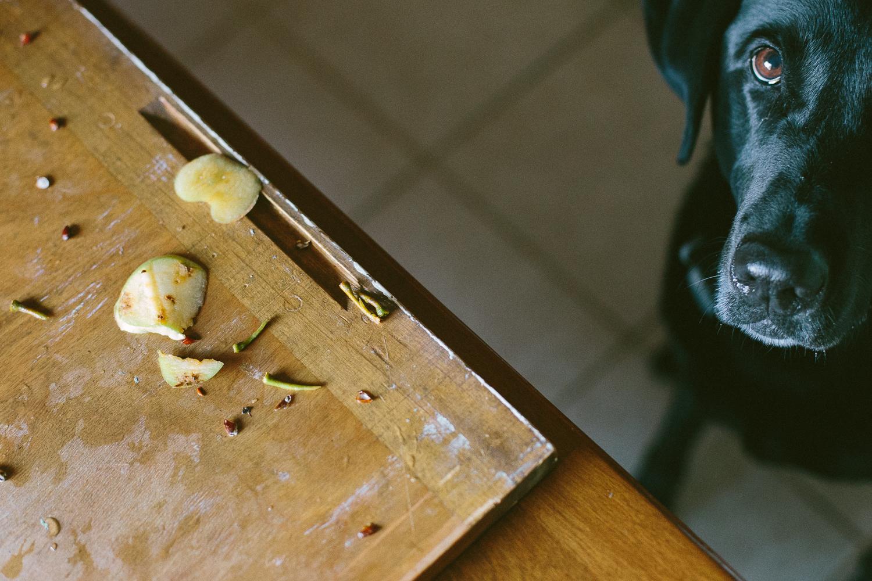 dog looking at apple scraps
