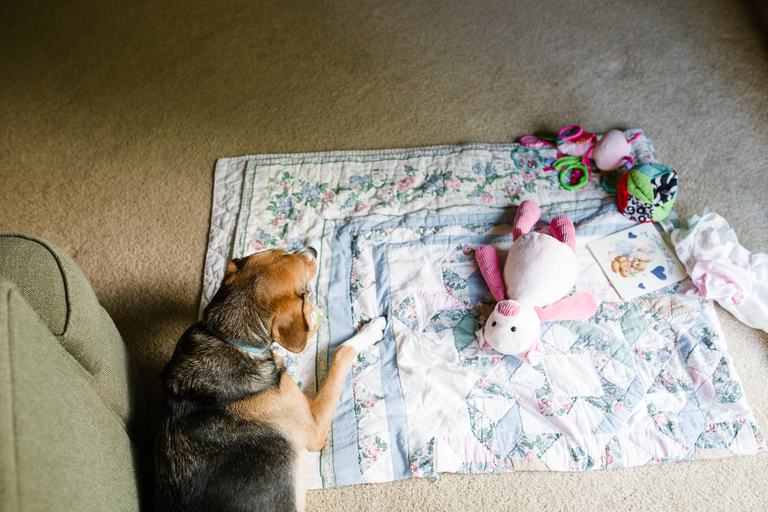 family dog laying on floor