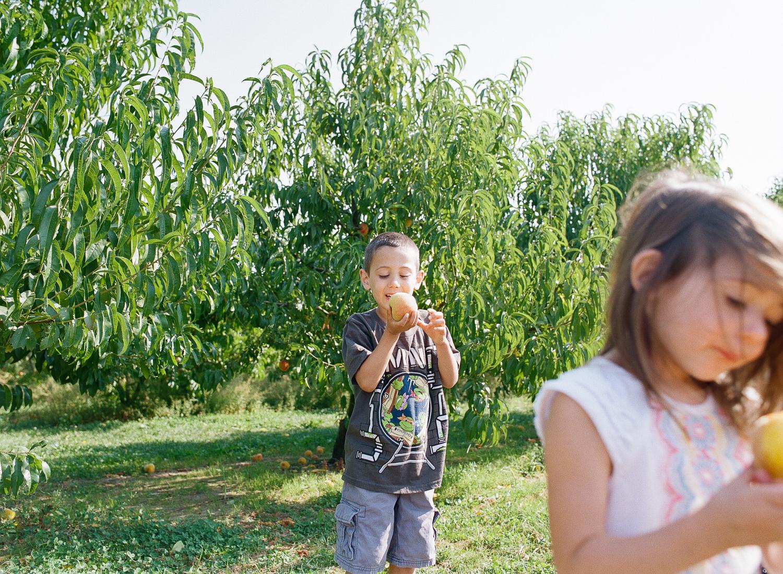 family picking fresh peaches