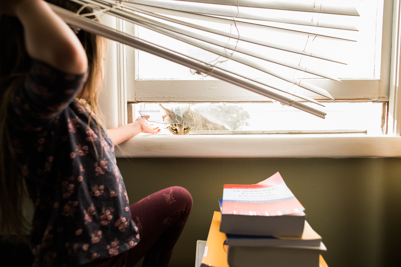 cat climbing through the open window