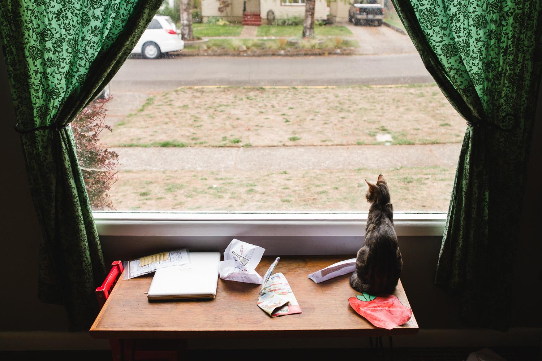 cat sitting in the window
