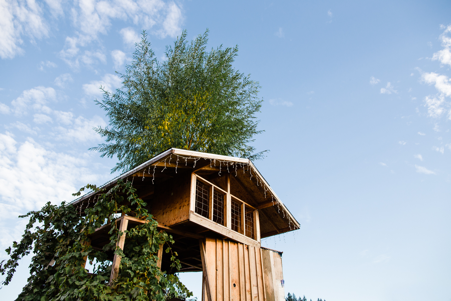 biggest tree house ever