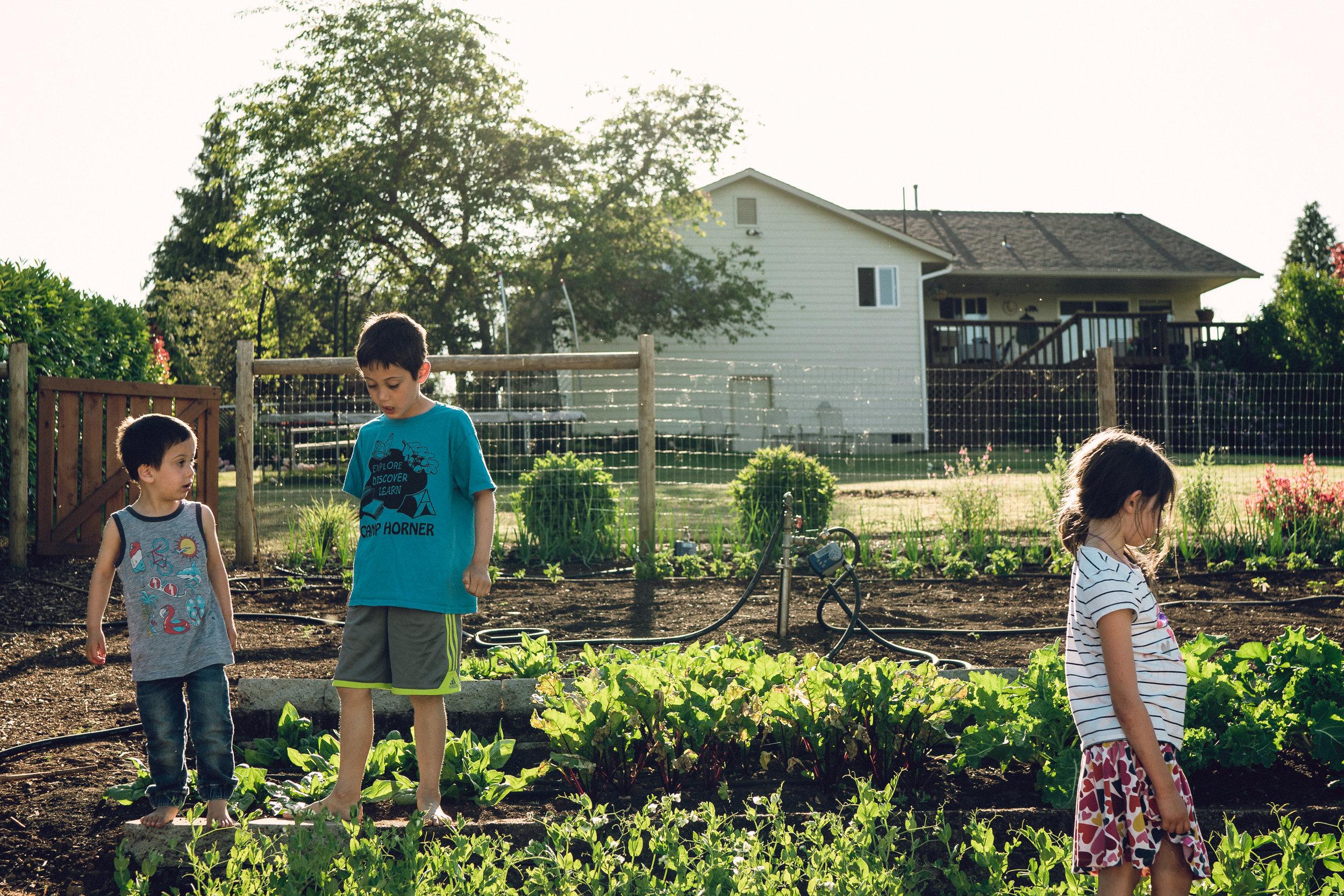 garden-18.jpg