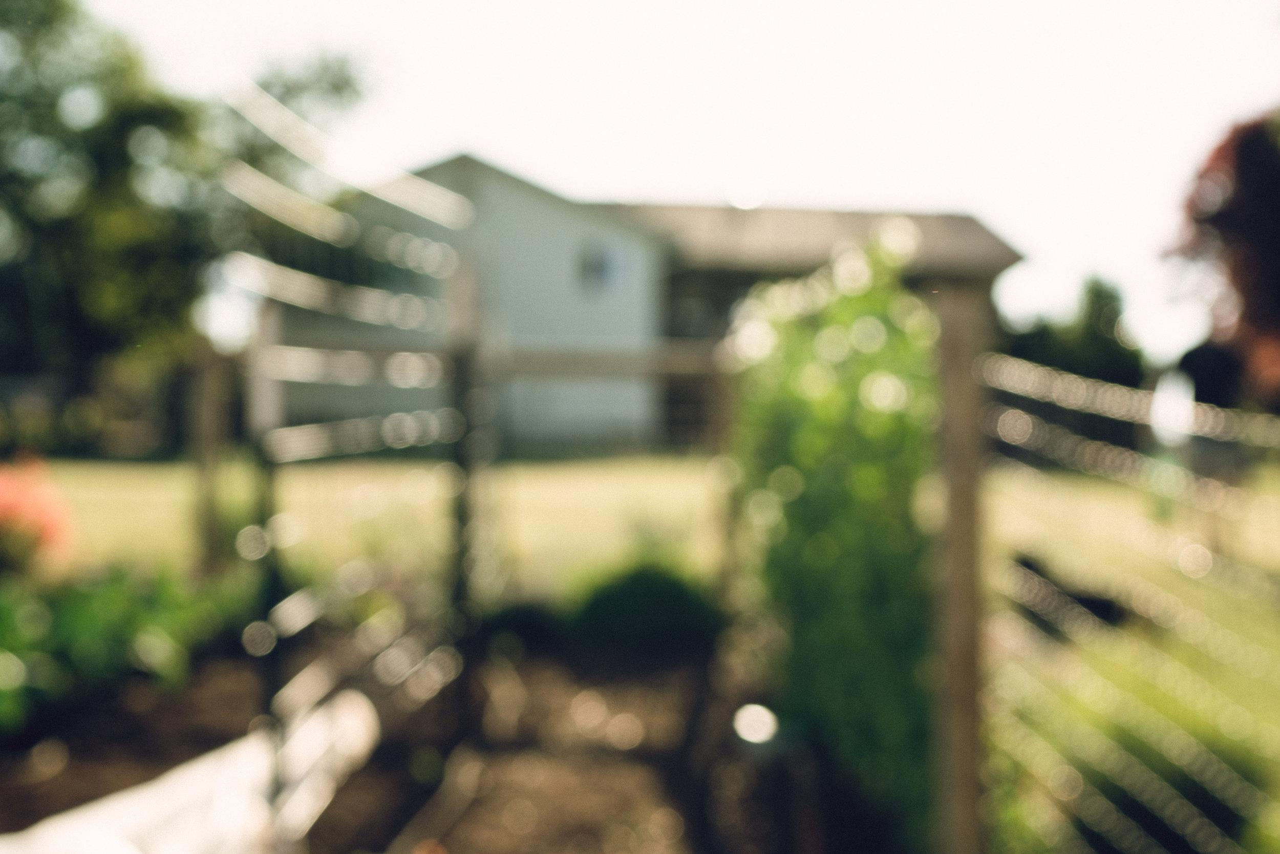 garden-16.jpg