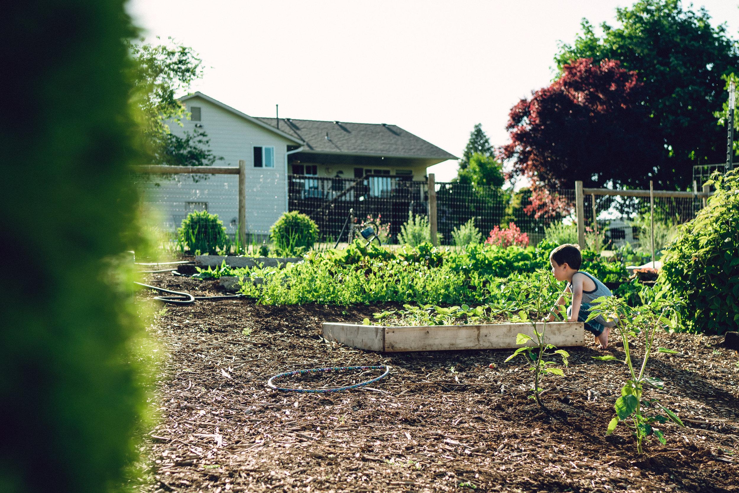 garden-14.jpg