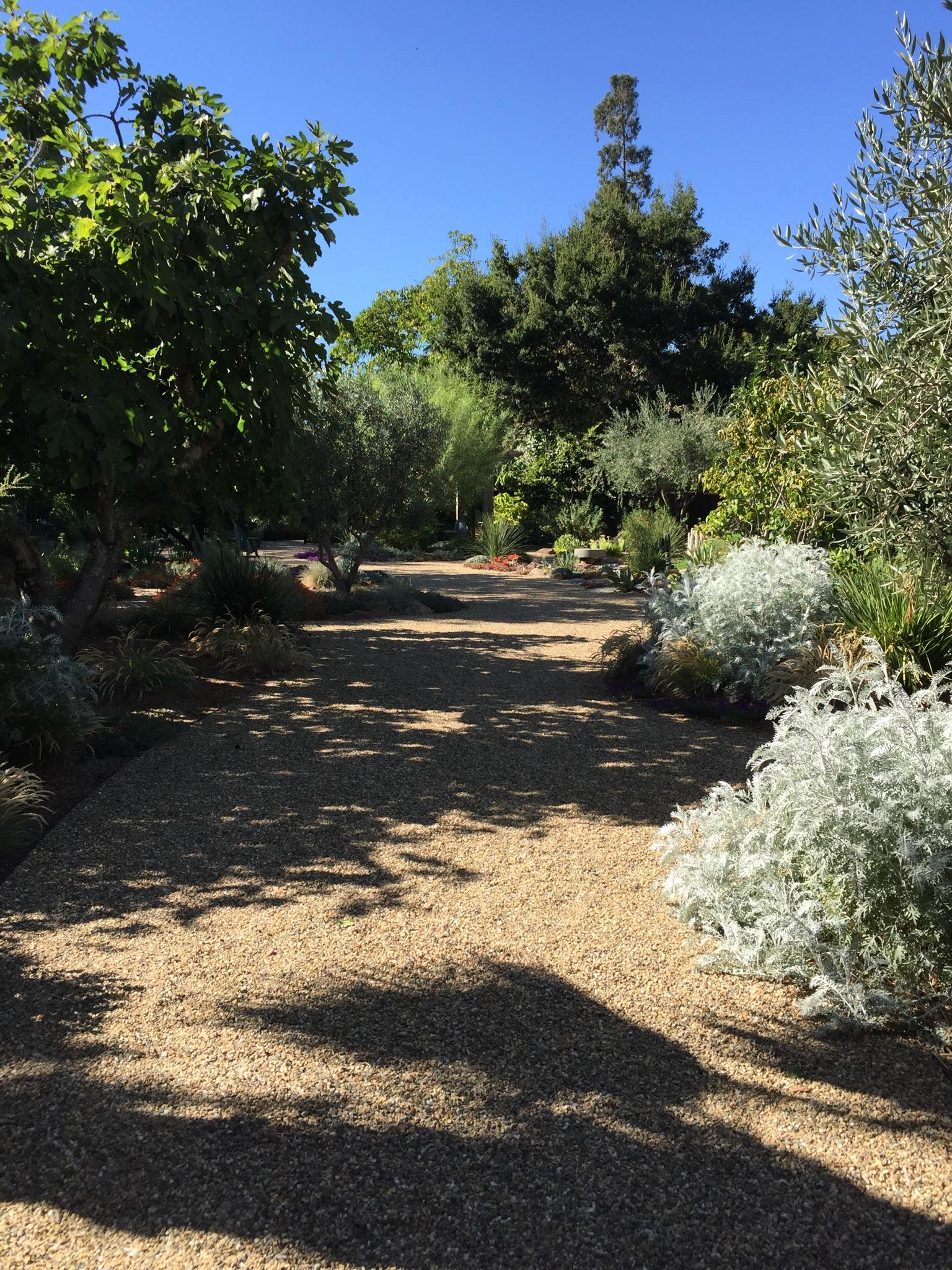 St Helena garden