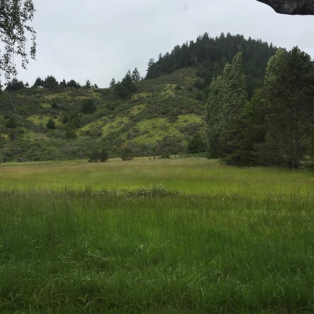 Got to take a little road trip up to the Russian River to look at an upcoming project.  This is the view of the open meadow off the client's back porch.  The word Solitude is fitting. And again, all the green!  #russianriver