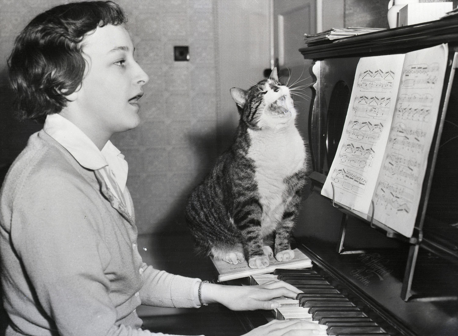 singing with cat