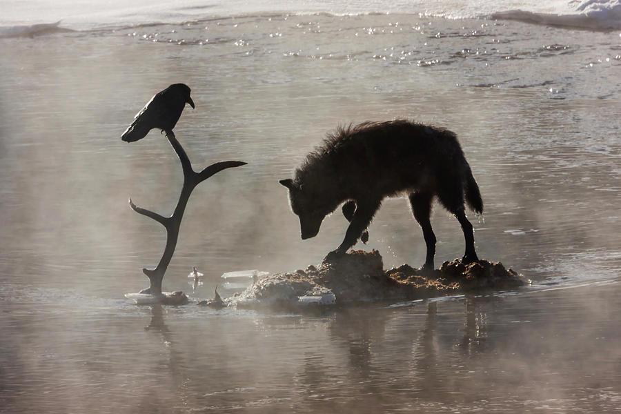 druid-wolf-and-raven-silhouette-mark-miller.jpg